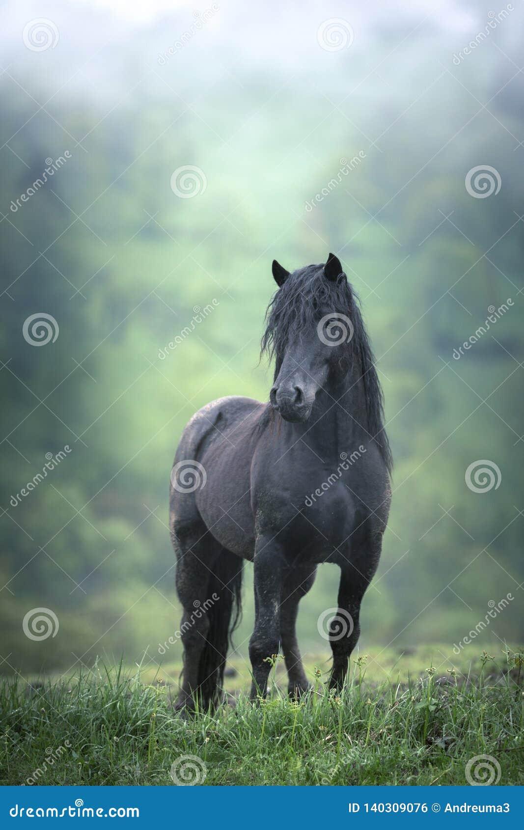 Άγριο μαύρο άλογο στην υδρονέφωση