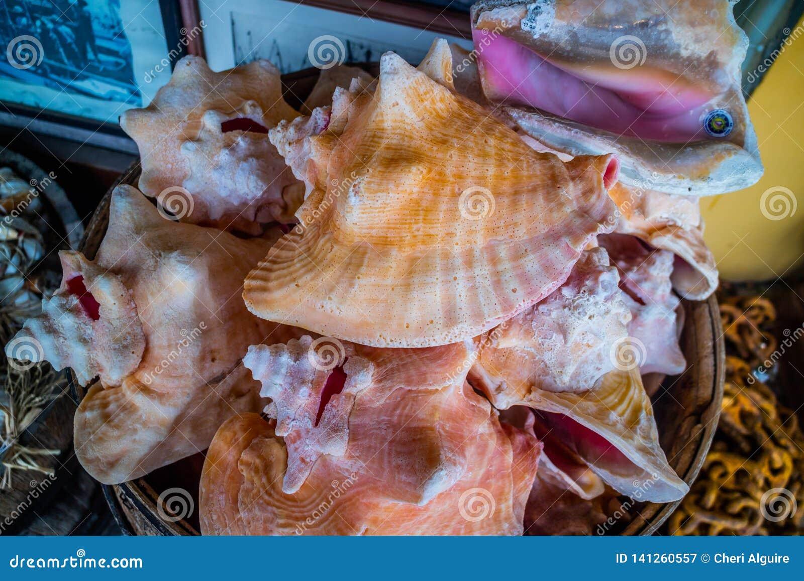 Ένα μεγάλο θαλασσινό κοχύλι conch στη Key West, Φλώριδα