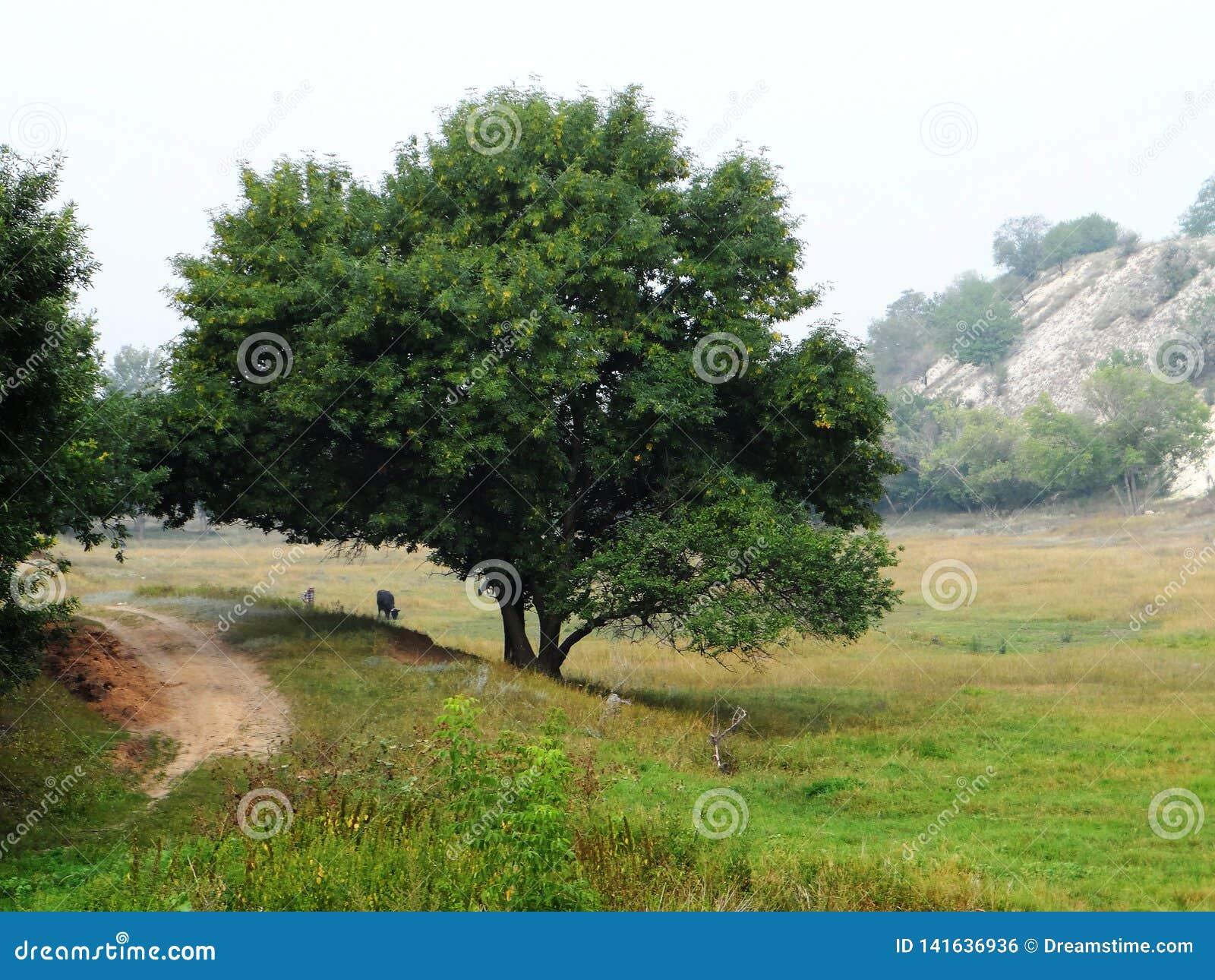 Ένα δέντρο στο φαράγγι
