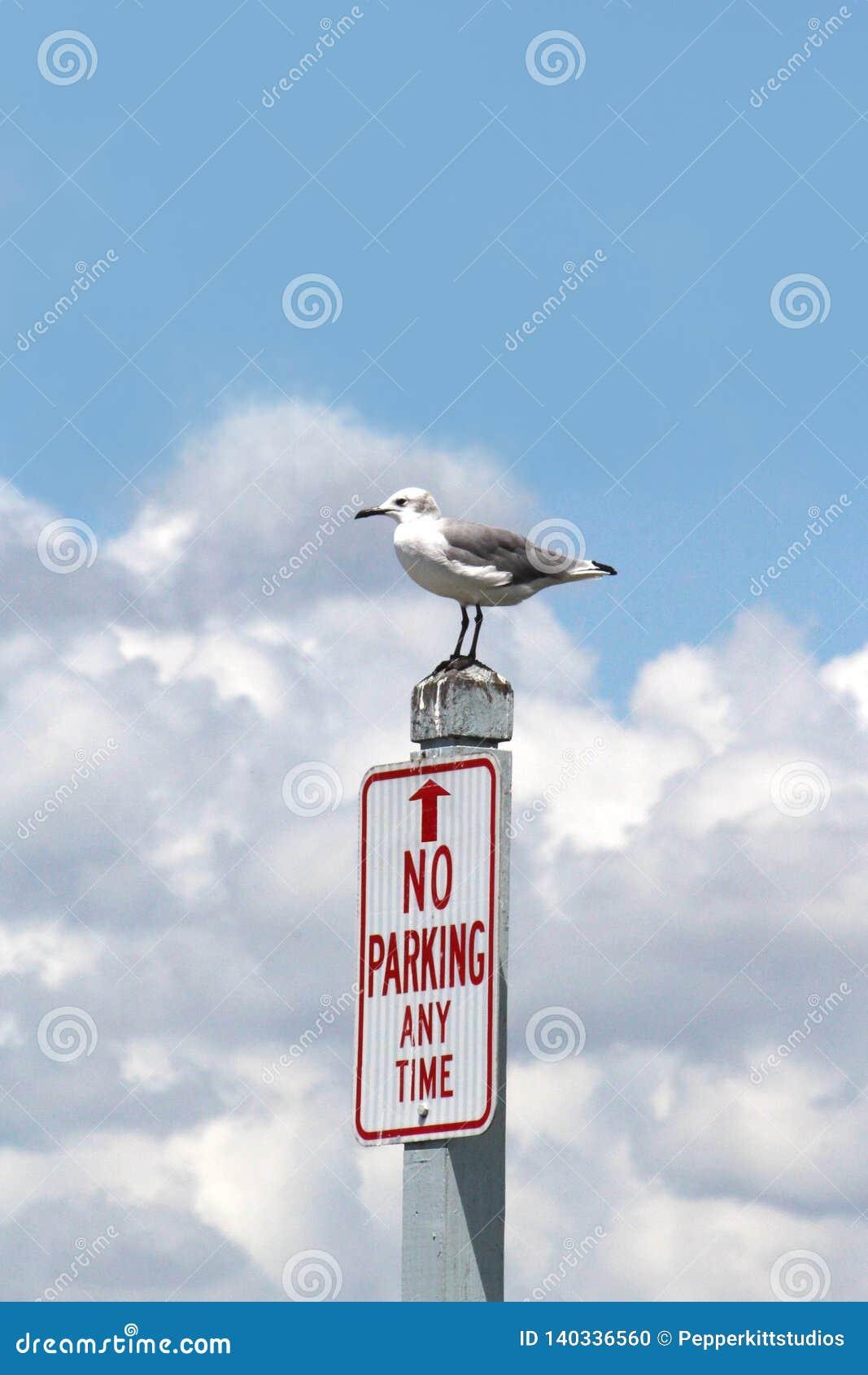 Αστείες Seagull στάσεις επάνω σε ένα σημάδι χώρων στάθμευσης αριθ.