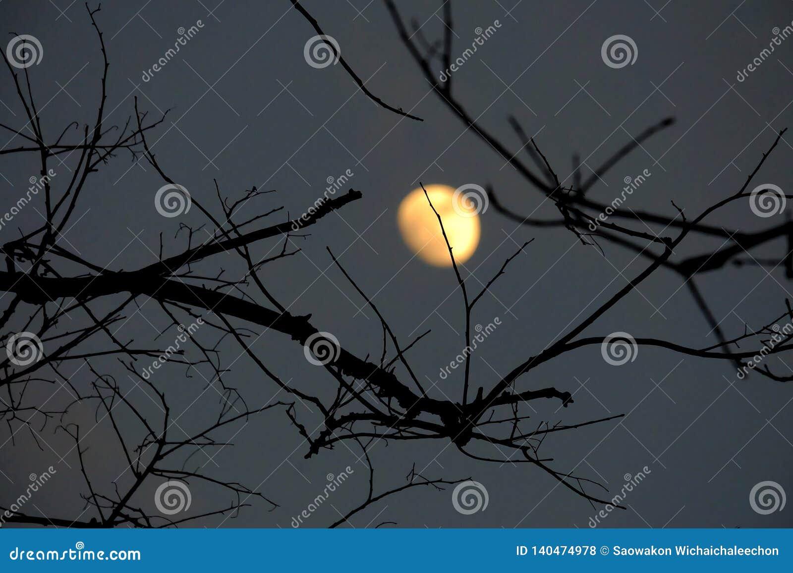 Απόκοσμη σκιά των νεκρών φύλλων δέντρων στη σκοτεινή νύχτα με το κίτρινο σεληνόφωτο θαμπάδων