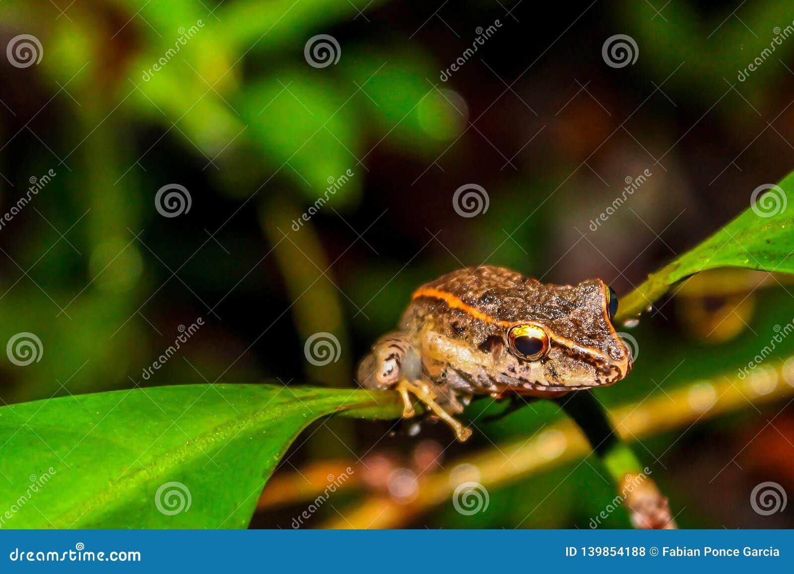Βάτραχος που κοιτάζει μέσω ενός κλάδου