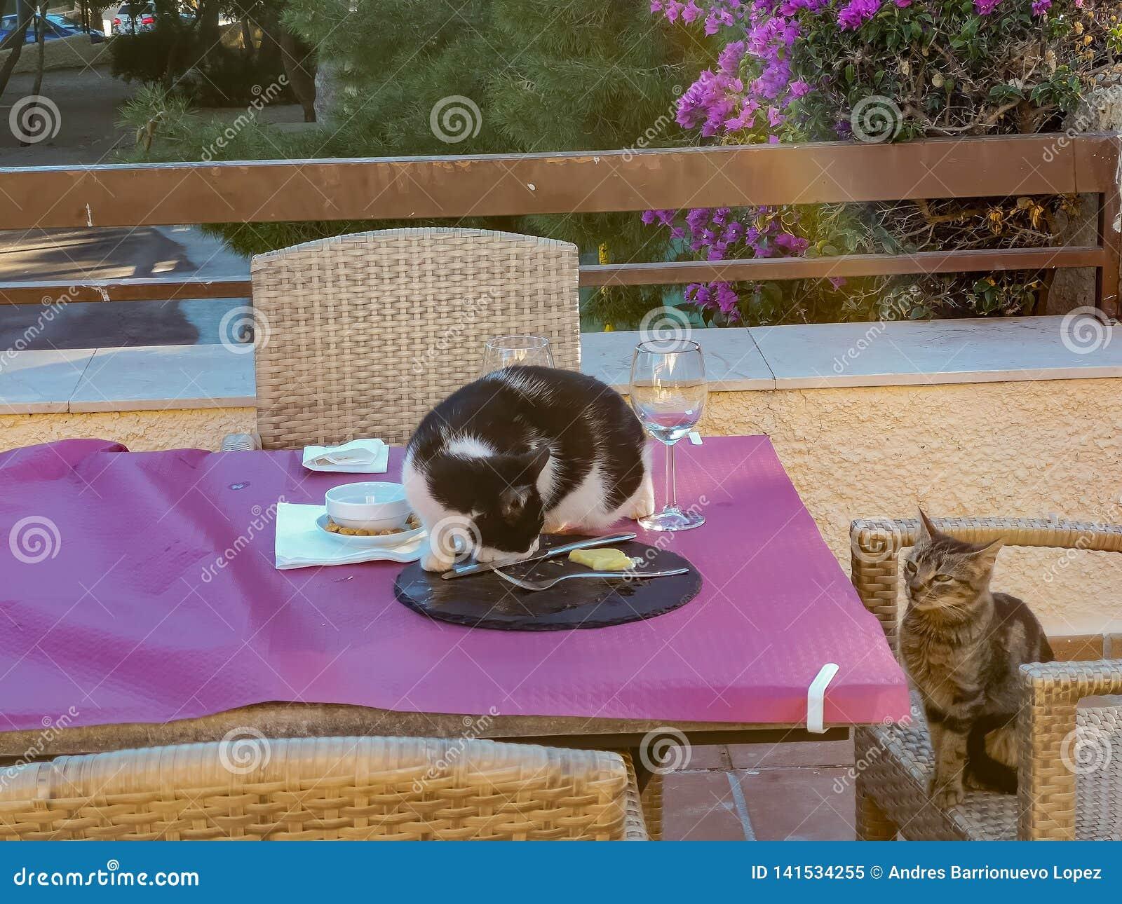 Γάτες που πελεκούν τα τρόφιμα από έναν πίνακα