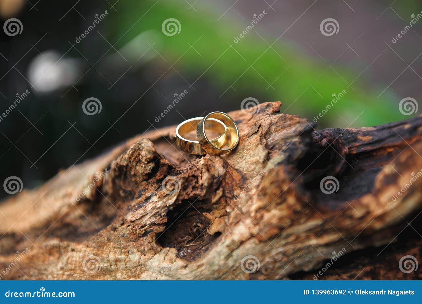 Γαμήλια δαχτυλίδια ως σύμβολο της ευτυχισμένης ζωής σε ένα κολόβωμα δέντρων