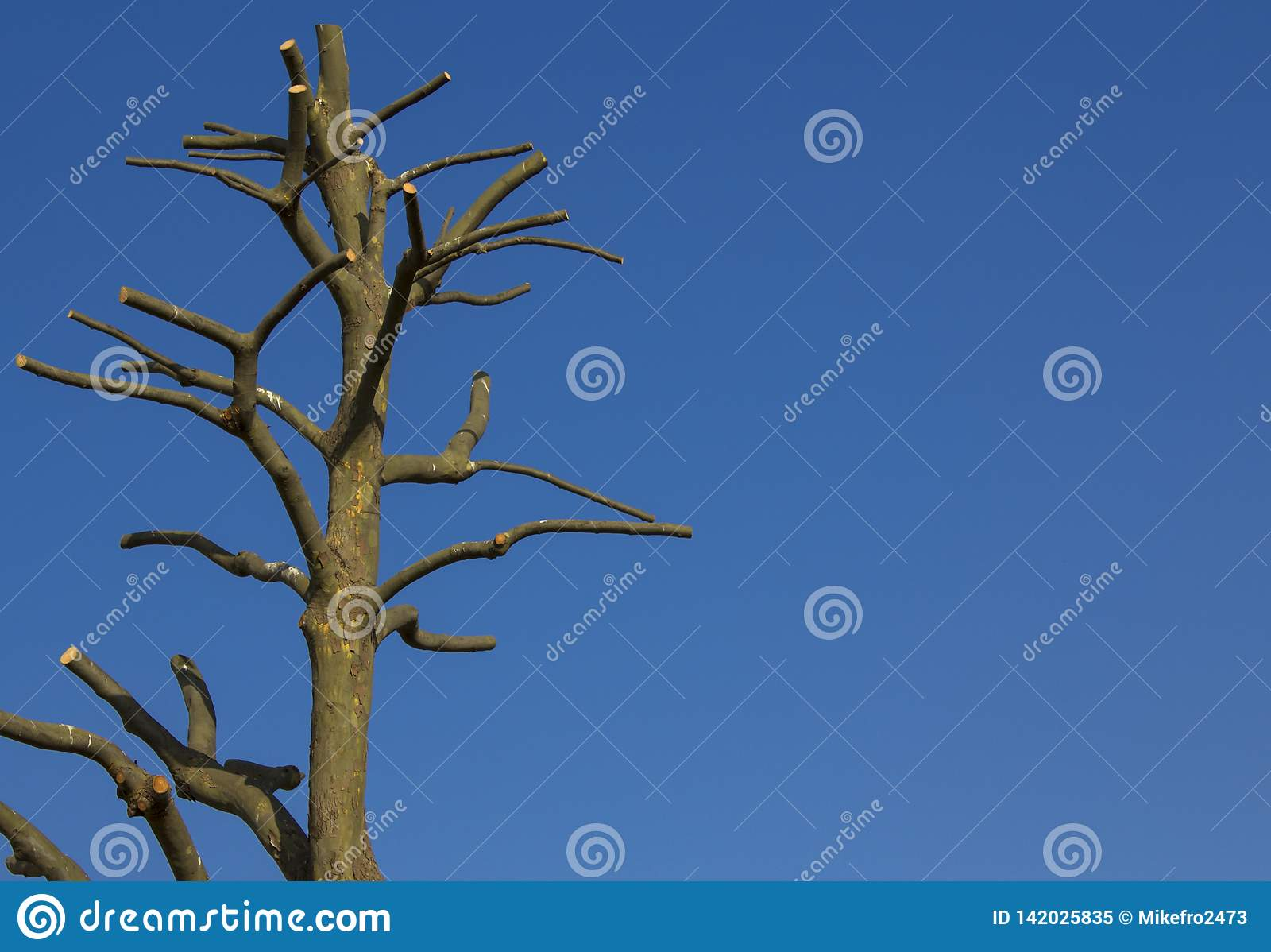 Γυμνό δέντρο ενάντια στο μπλε ουρανό διάστημα αντιγράφων
