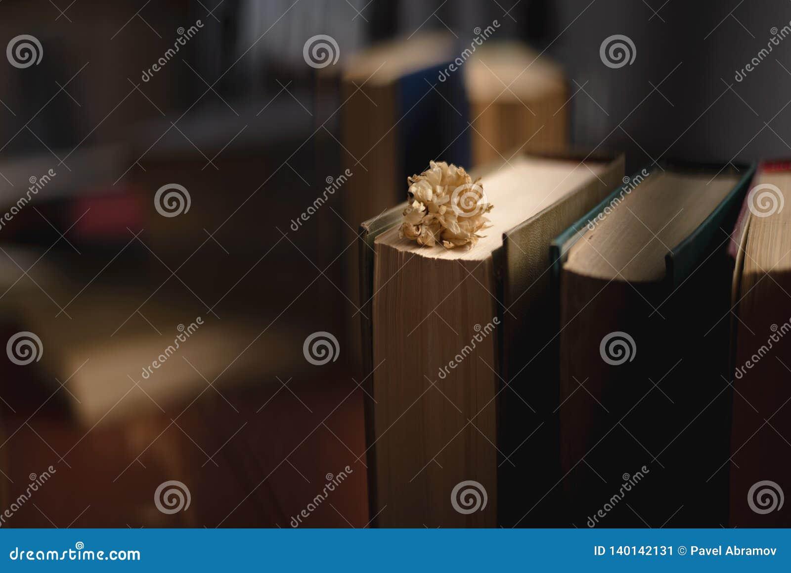 Εκλεκτής ποιότητας σωρός βιβλίων στην παλαιά ξύλινη επιφάνεια στο θερμό κατευθυντικό φως