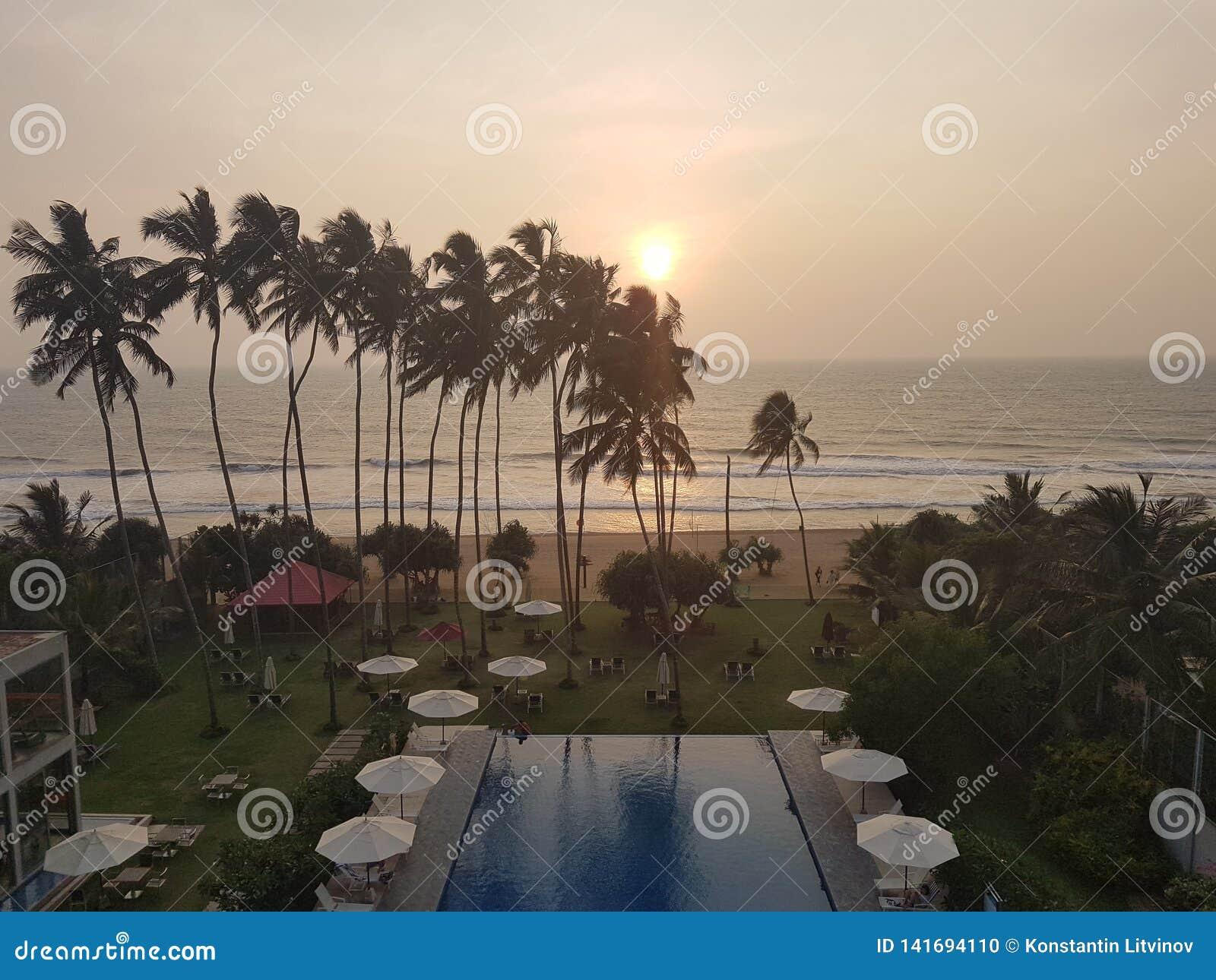 Εξωτικό ξενοδοχείο με την πισίνα και φοίνικες στην παραλία του ωκεανού, Σρι Λάνκα, παραλία