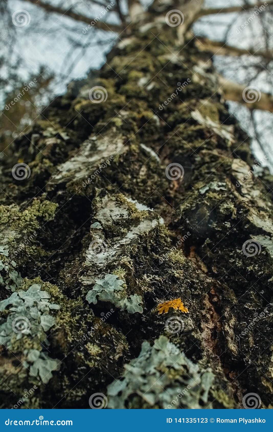 Ευρύ, μεγάλο δέντρο Όλος υψηλότερος και υψηλότερος και υψηλότερος