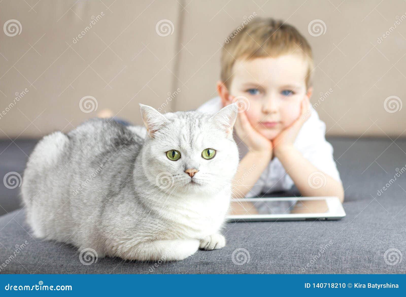 Ευτυχής λίγο παιδί που χαλαρώνει στον καναπέ με μια σκωτσέζικη ασημένια γάτα Παιδί αγοριών με τη φιλία γατών στο εσωτερικό και κα