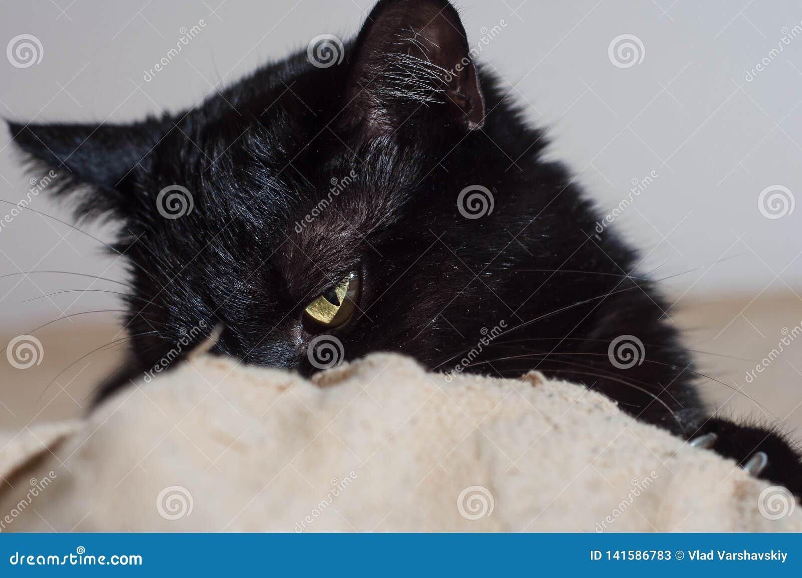 Ζωή των γατών και των ανθρώπων στο σπίτι