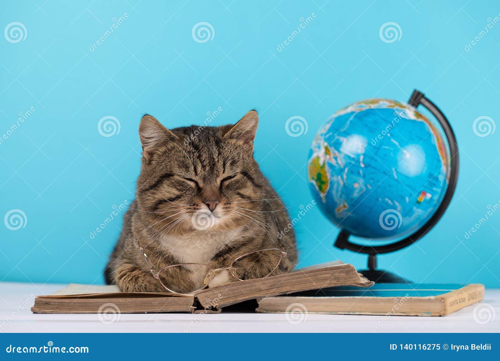 Η γάτα βρίσκεται στο διαβασμένο βιβλίο βιβλίο η γάτα στη βιβλιοθήκη