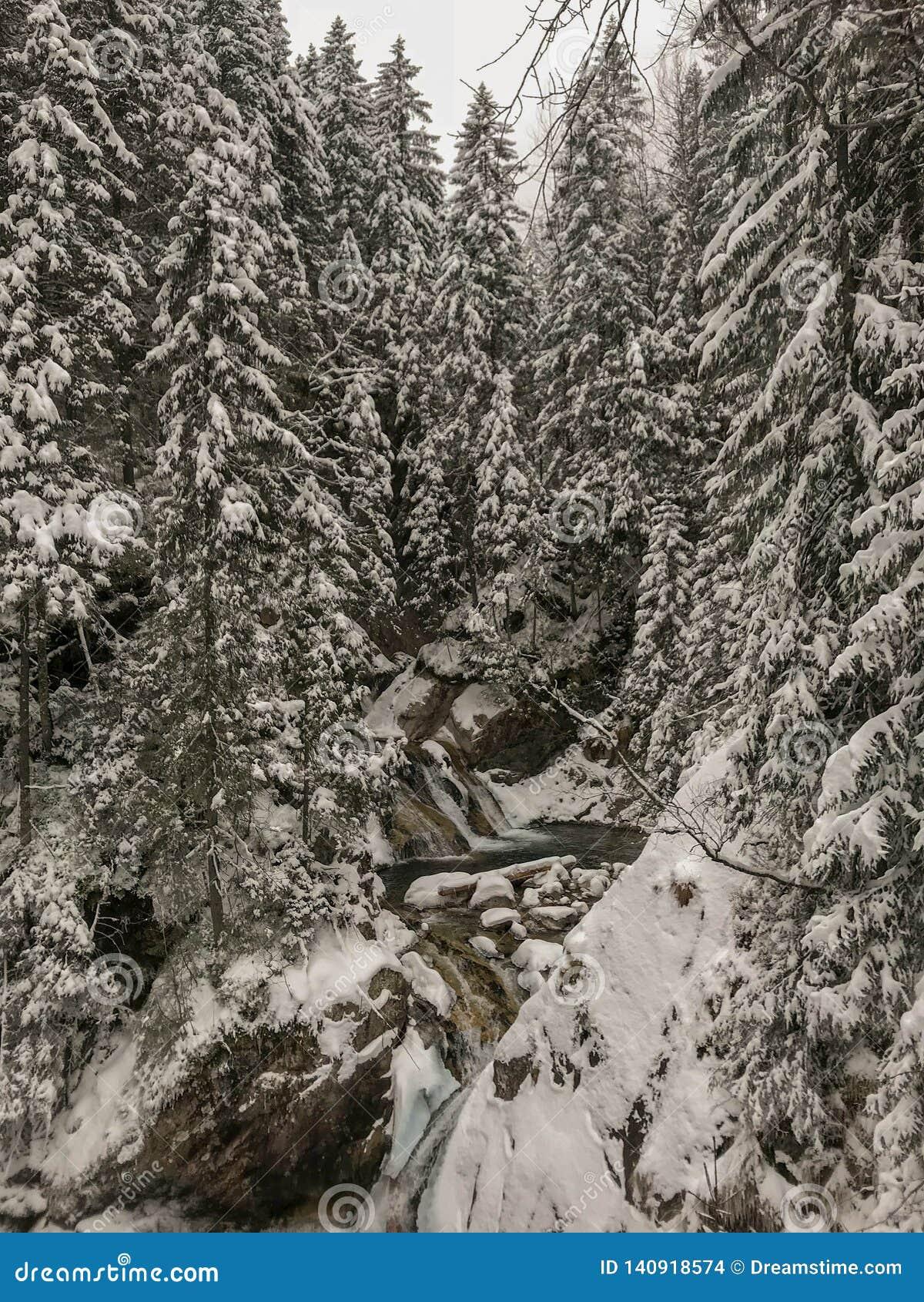 Καταρράκτες χειμερινού ταϊσμένοι άνοιξη κολπίσκου το χειμώνα, Tatry, Πολωνία