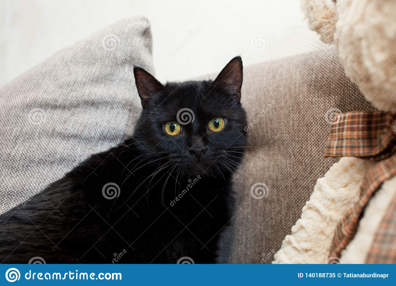 κλείστε επάνω μαύρη γάτα με τα κίτρινα μάτια σε ένα νέο σπίτι Διανοητικά και συναισθηματικά προβλήματα των γατών