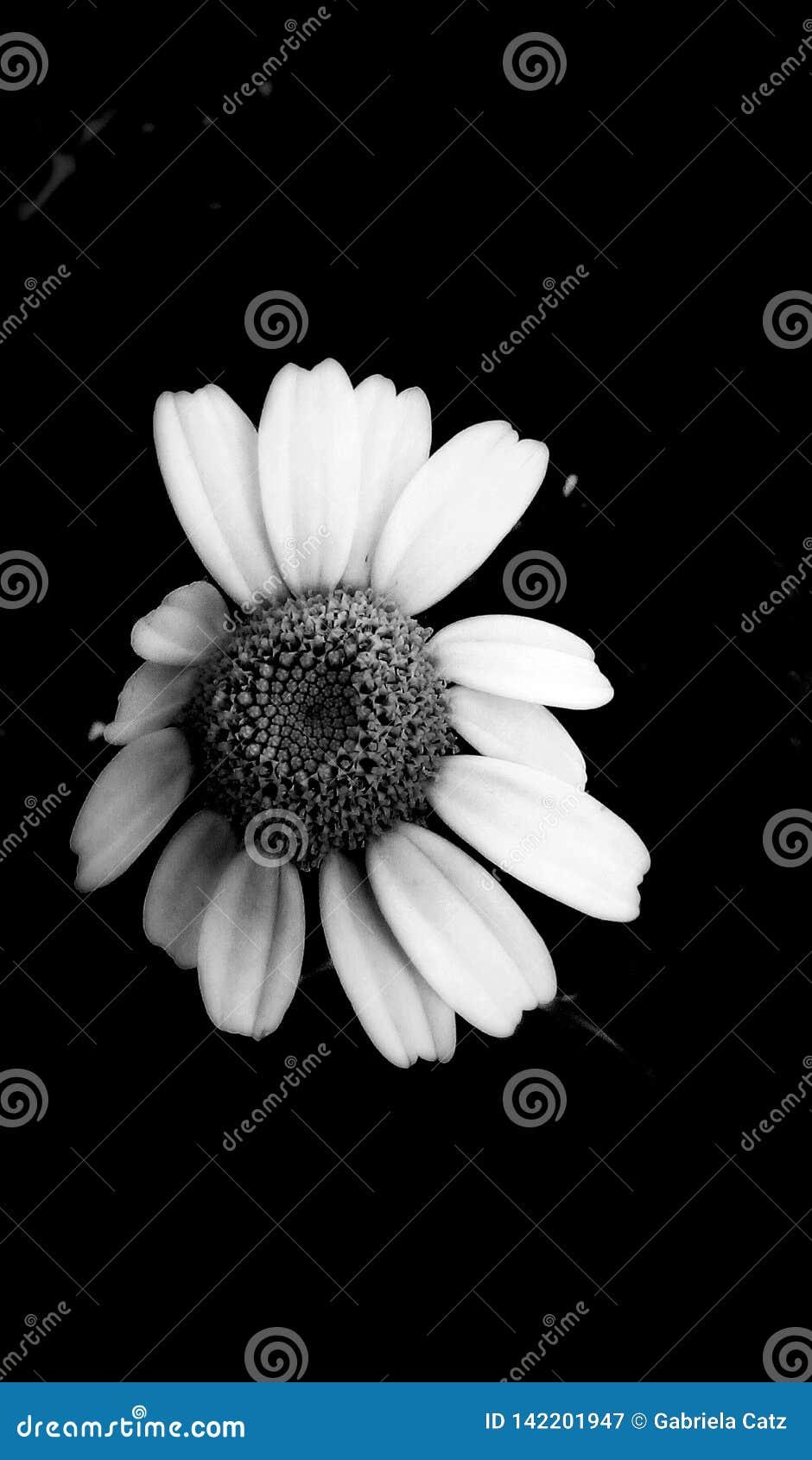 Λουλούδι σε μονοχρωματικό