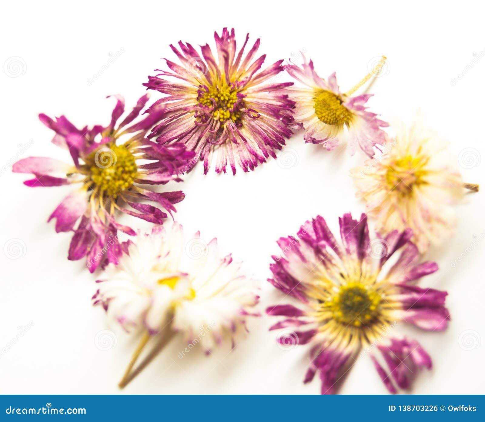 Μαργαρίτα και καρδιά λουλουδιών στο λευκό
