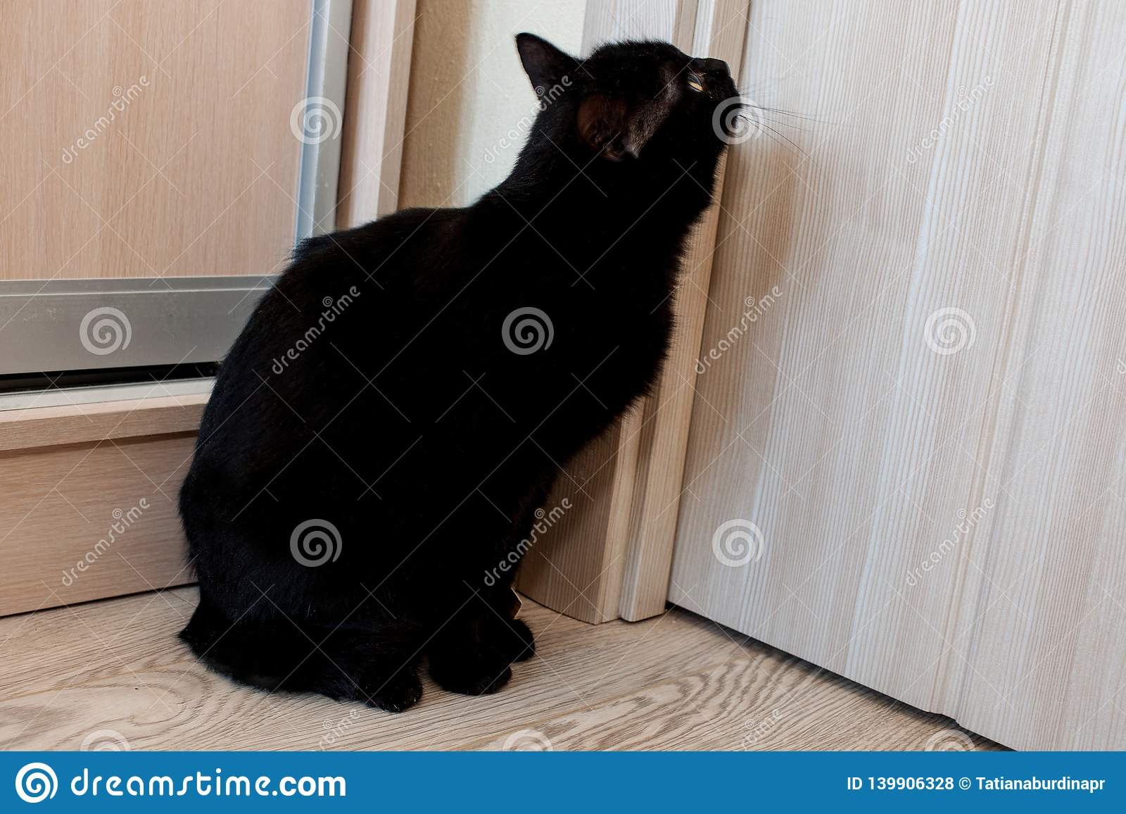Μια απολύτως μαύρη γάτα κάθεται από την πόρτα και περιμένει την να ανοίξει
