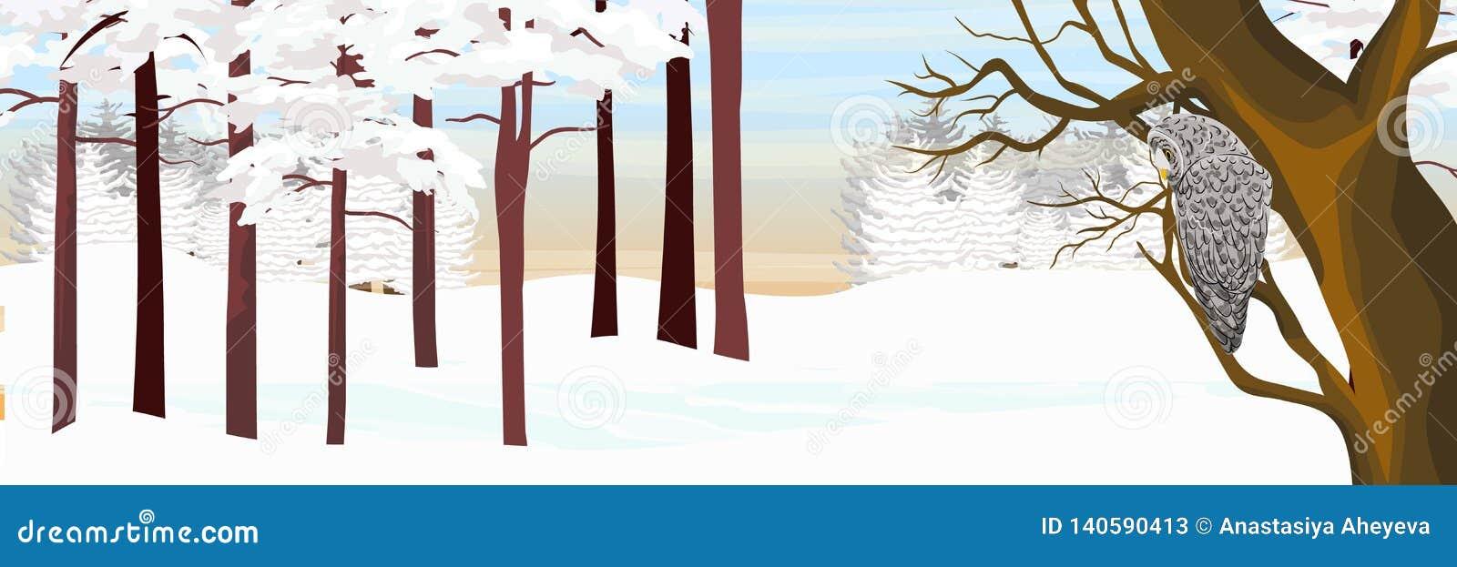 Μια γκρίζα κουκουβάγια κάθεται σε ένα δέντρο σε ένα δάσος χειμερινών πεύκων