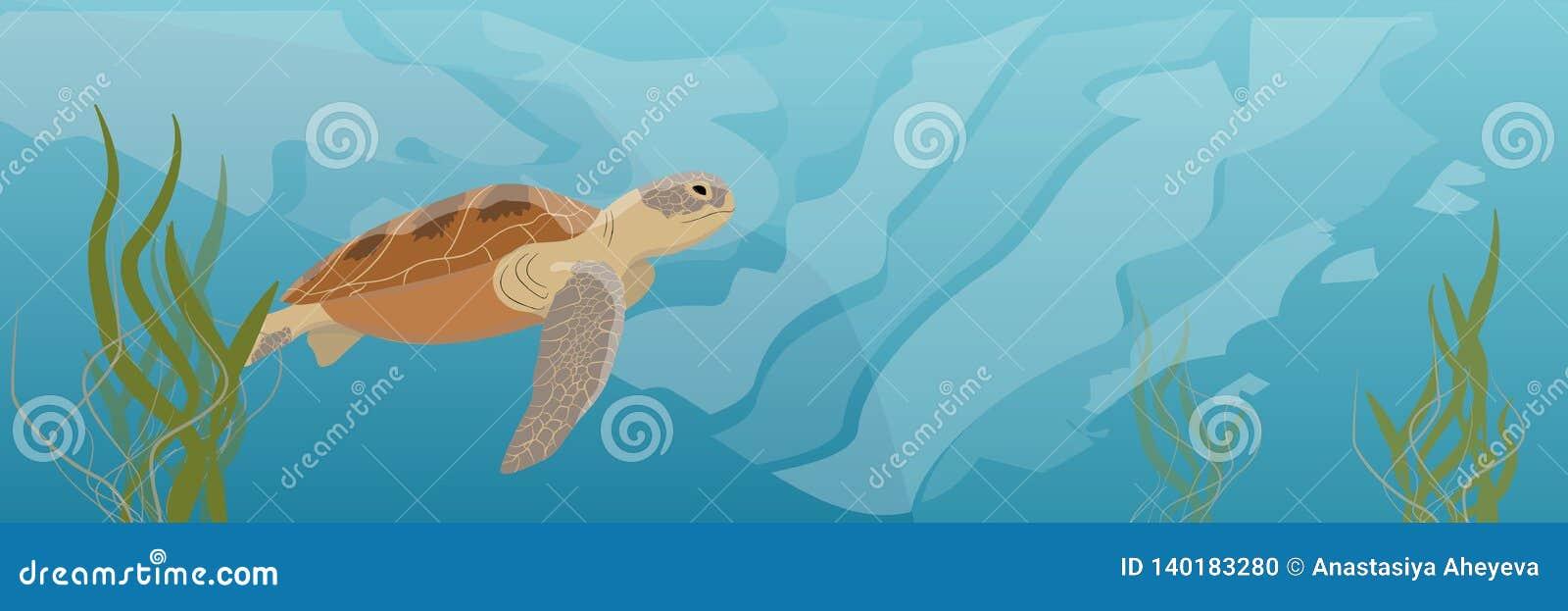 Μια μεγάλη σούπα χελωνών πράσινης θάλασσας κολυμπά κάτω από το νερό φύκι