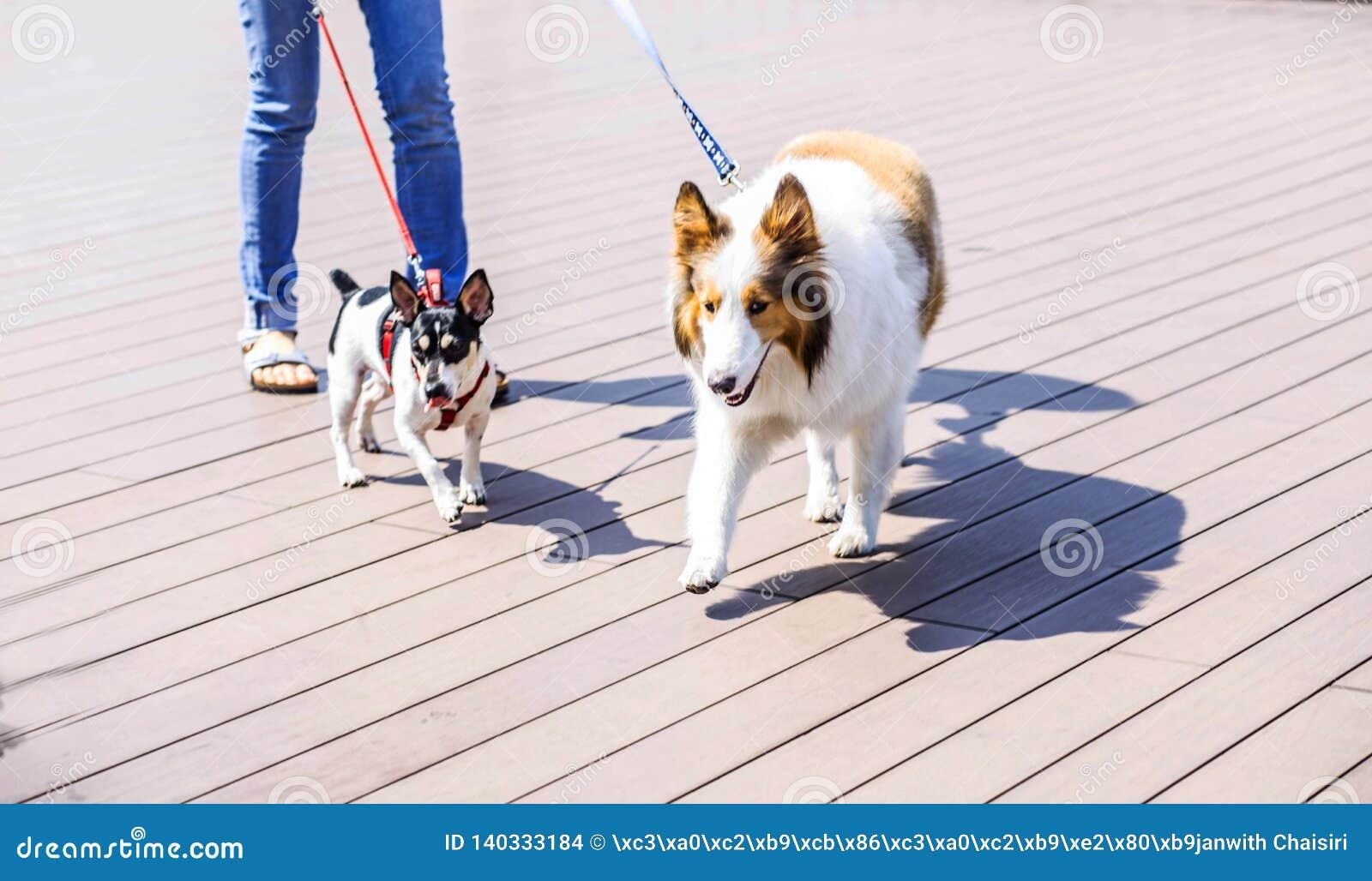 Νέα βιβλία εκμετάλλευσης γυναικών σε ένα χέρι περπατώντας με ένα σκυλί Φιλία μεταξύ του ανθρώπου και του σκυλιού Έννοια κατοικίδι