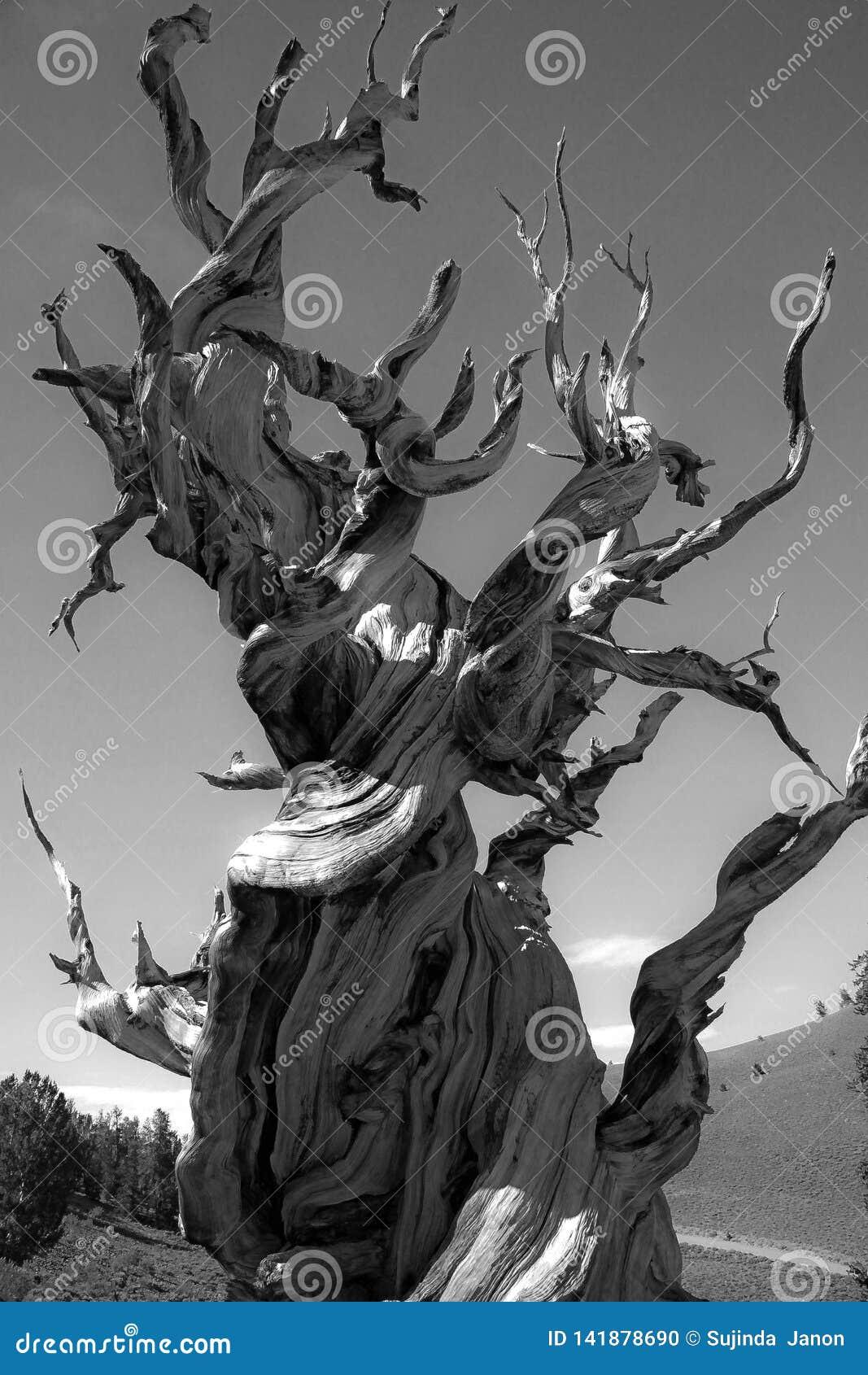 Νεκρό δέντρο