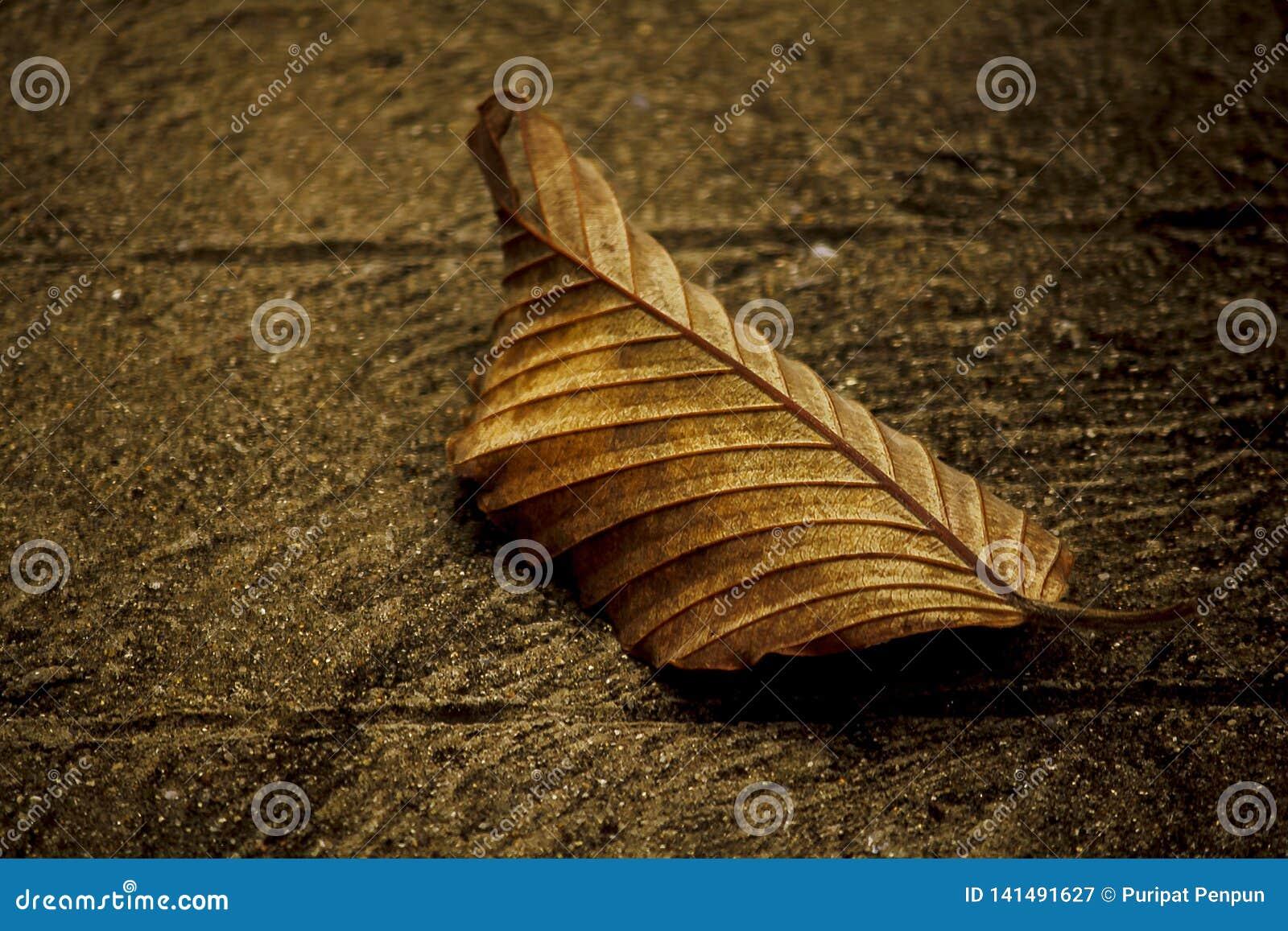 Ξεράνετε τα φύλλα που αφόρησαν το πάτωμα τσιμέντου