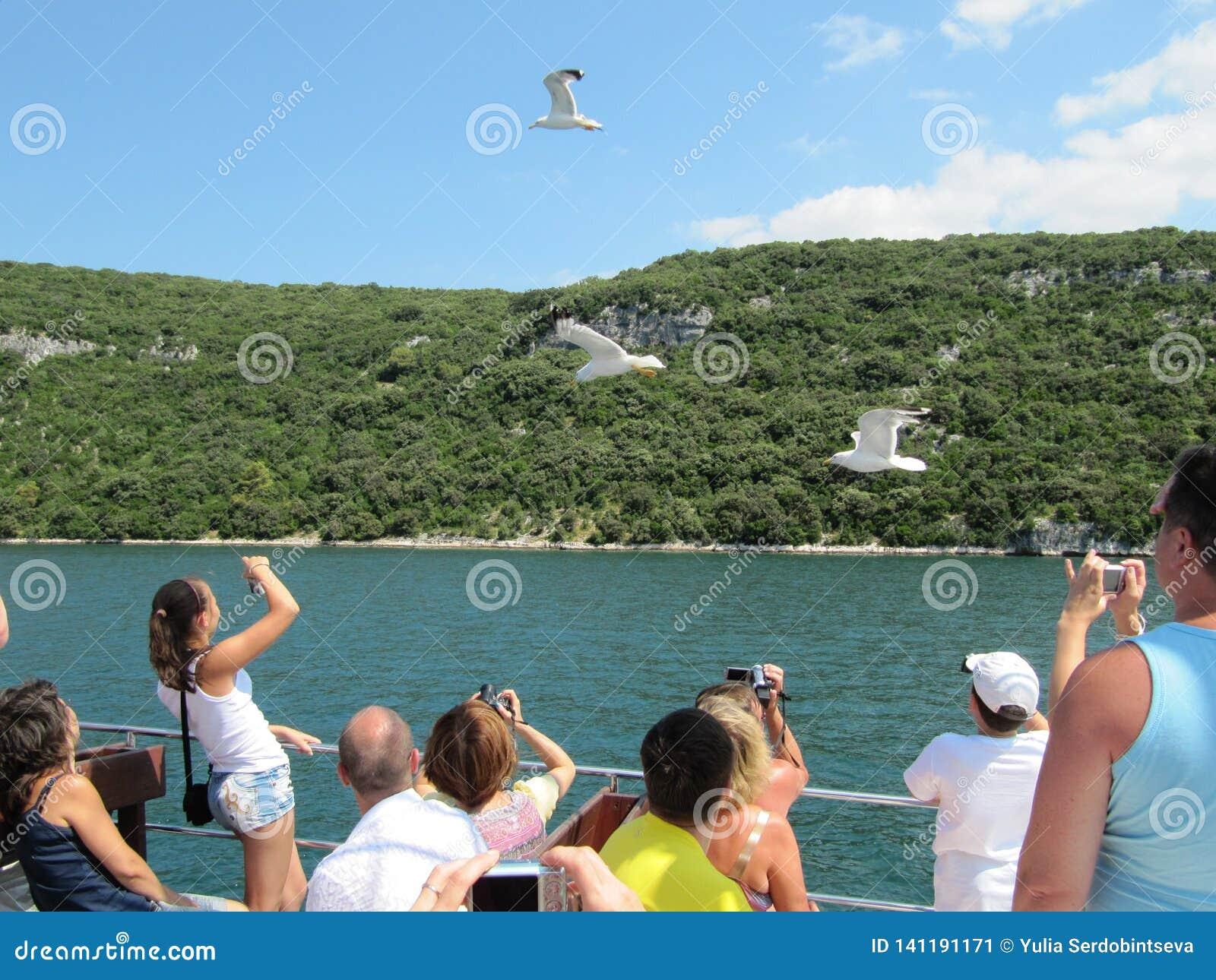 Οι τουρίστες που πλέουν με το πορθμείο seagulls τροφών και παίρνουν τις εικόνες Κροατία, Istra - 20 Ιουλίου 2010