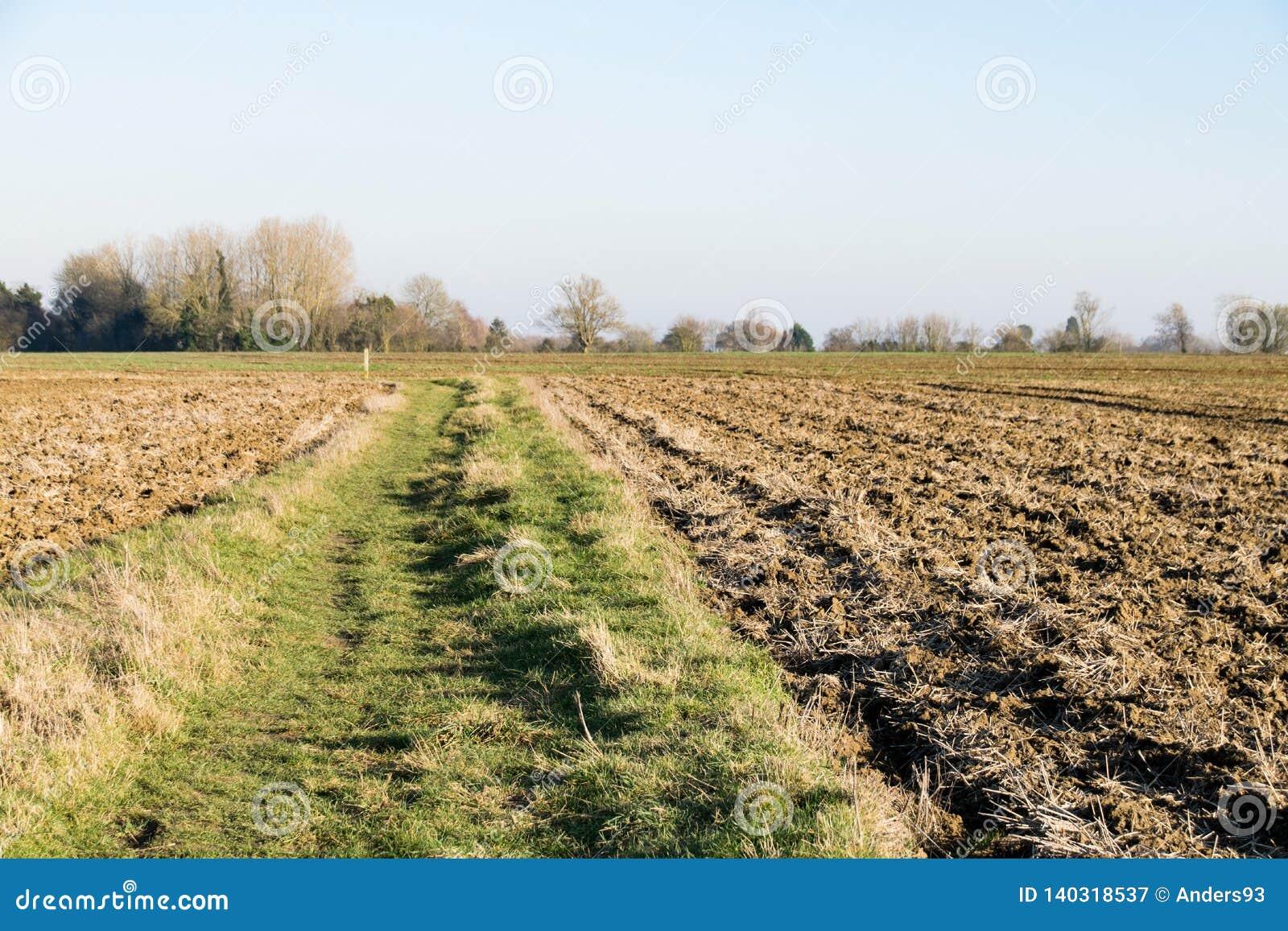 Ο θερμός καιρός Unseasonally ως εποχές αλλάζει από το χειμώνα για με τη νέα αύξηση που αρχίζει να προκύπτει στα δέντρα και τους σ