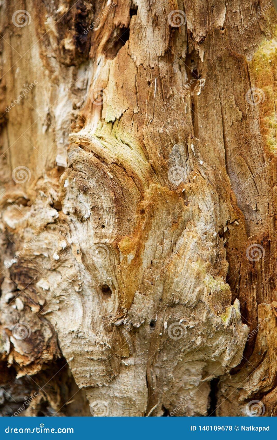 Ο κορμός δέντρων ελαττωμάτων