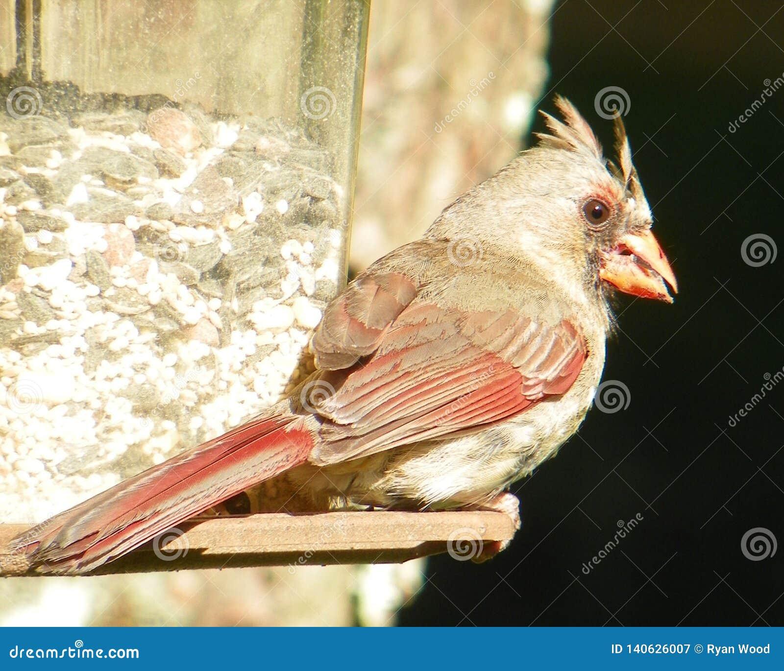 Ο χρόνος προγευμάτων ενός πουλιού