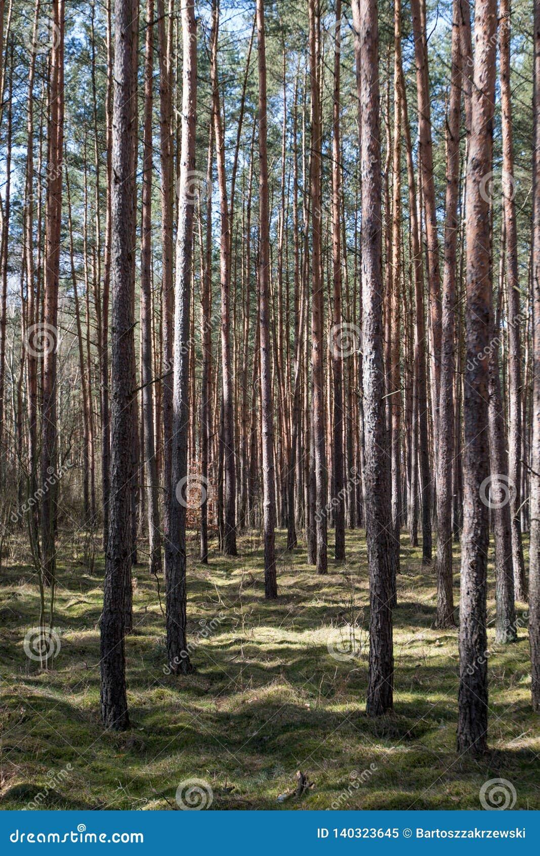 Δάσος που βλέπει την πρώιμη άνοιξη
