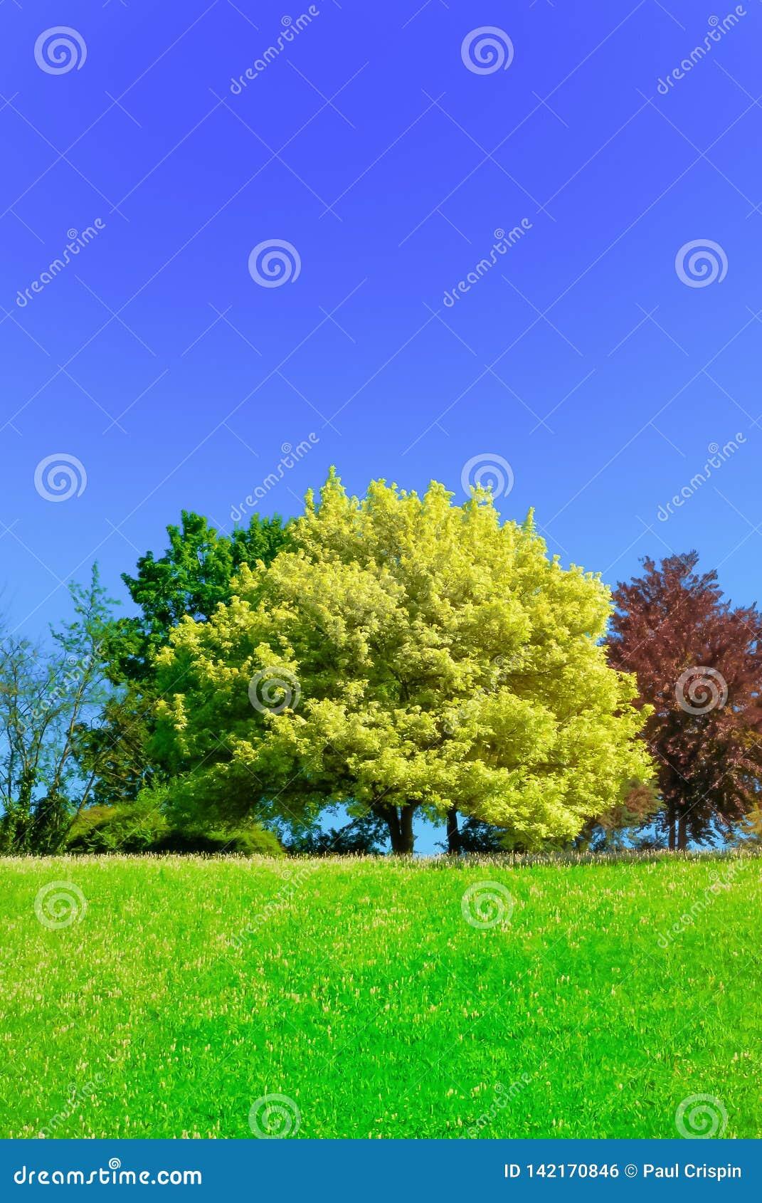 δέντρο κάστανων