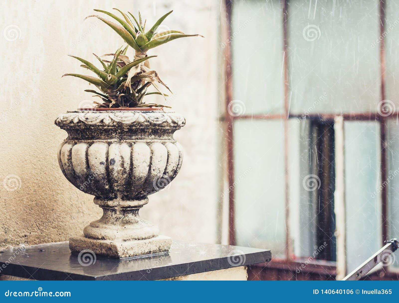 Διακοσμητικό δοχείο πετρών για τις εγκαταστάσεις στο πεζούλι ενός ιστορικού κτηρίου στην Κατάνια, Σικελία, Ιταλία, βροχερή ημέρα