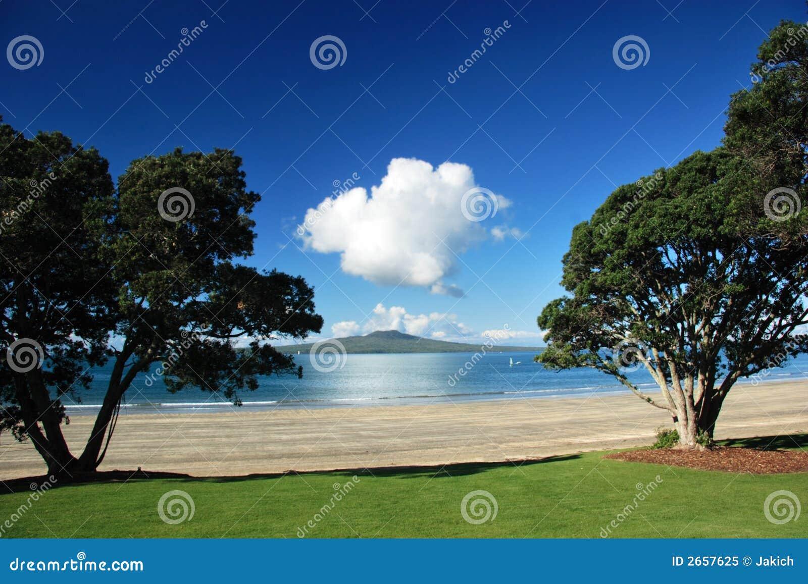 Île de Rangitoto par l arbre