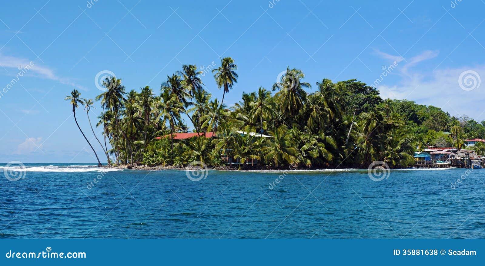 Le tropicale avec l 39 arbre de noix de coco de penchement photos libres de droits image 35881638 - Arbre noix de coco ...