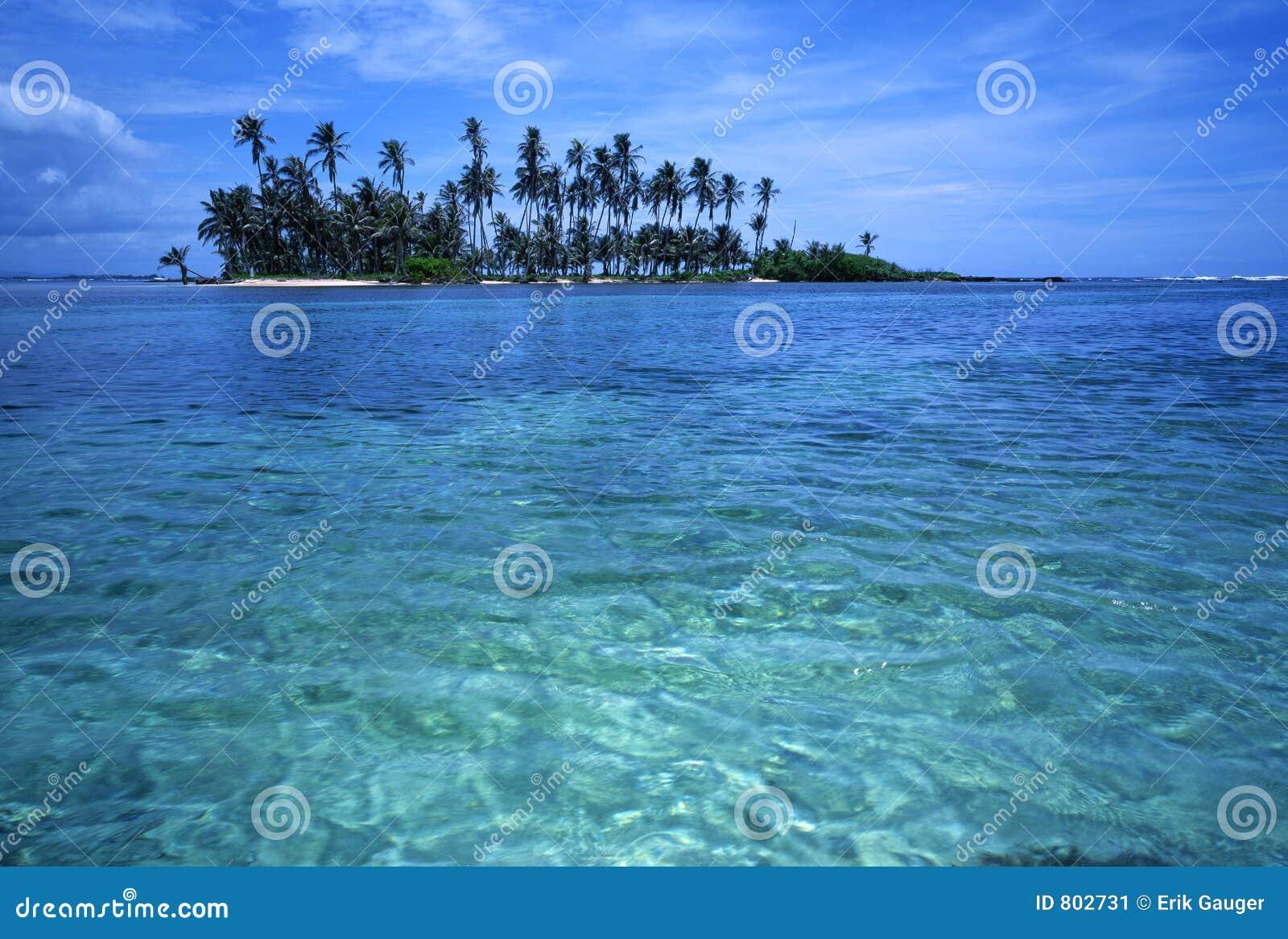 Île tropicale de paume
