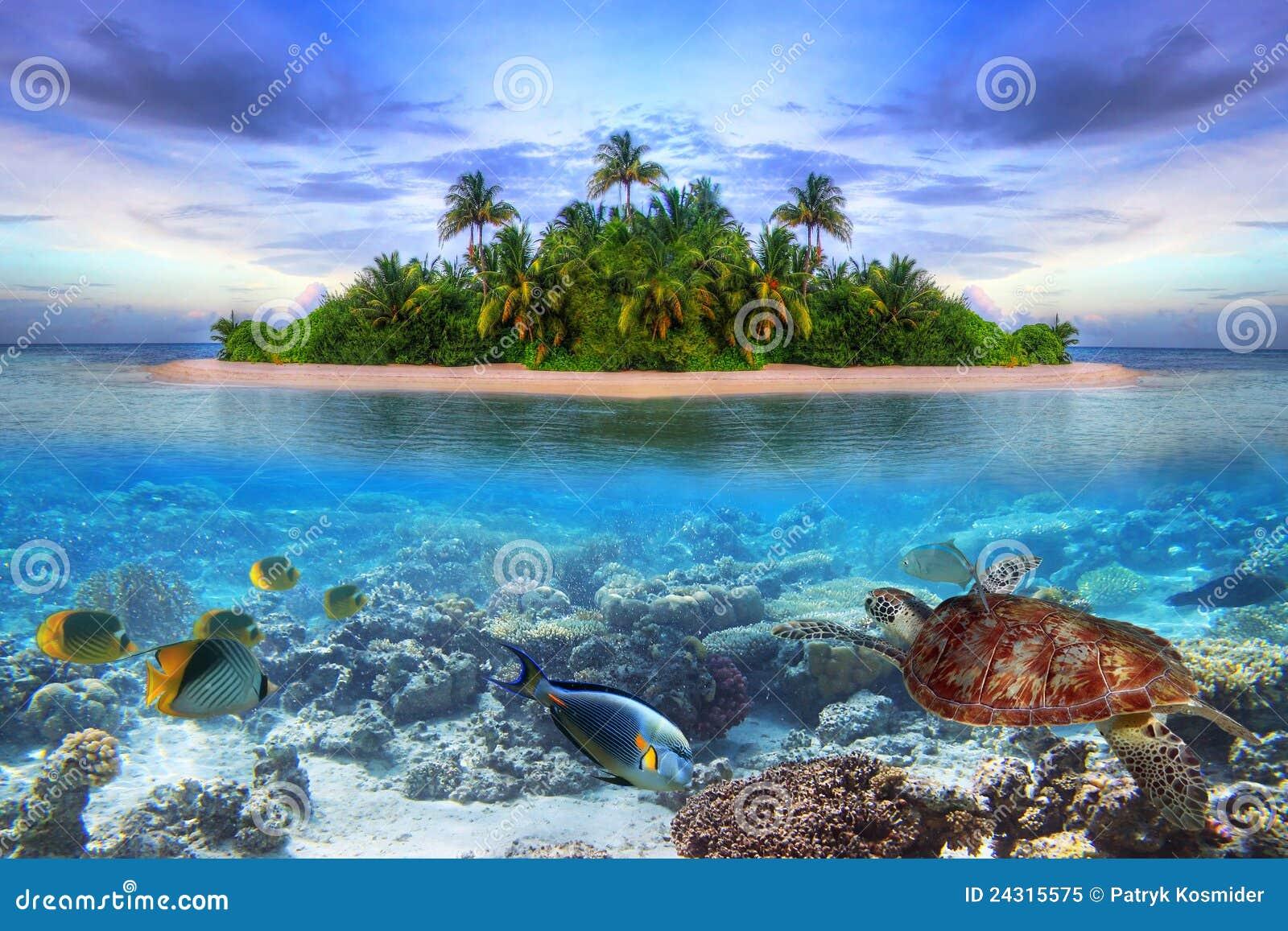 Île tropicale des Maldives