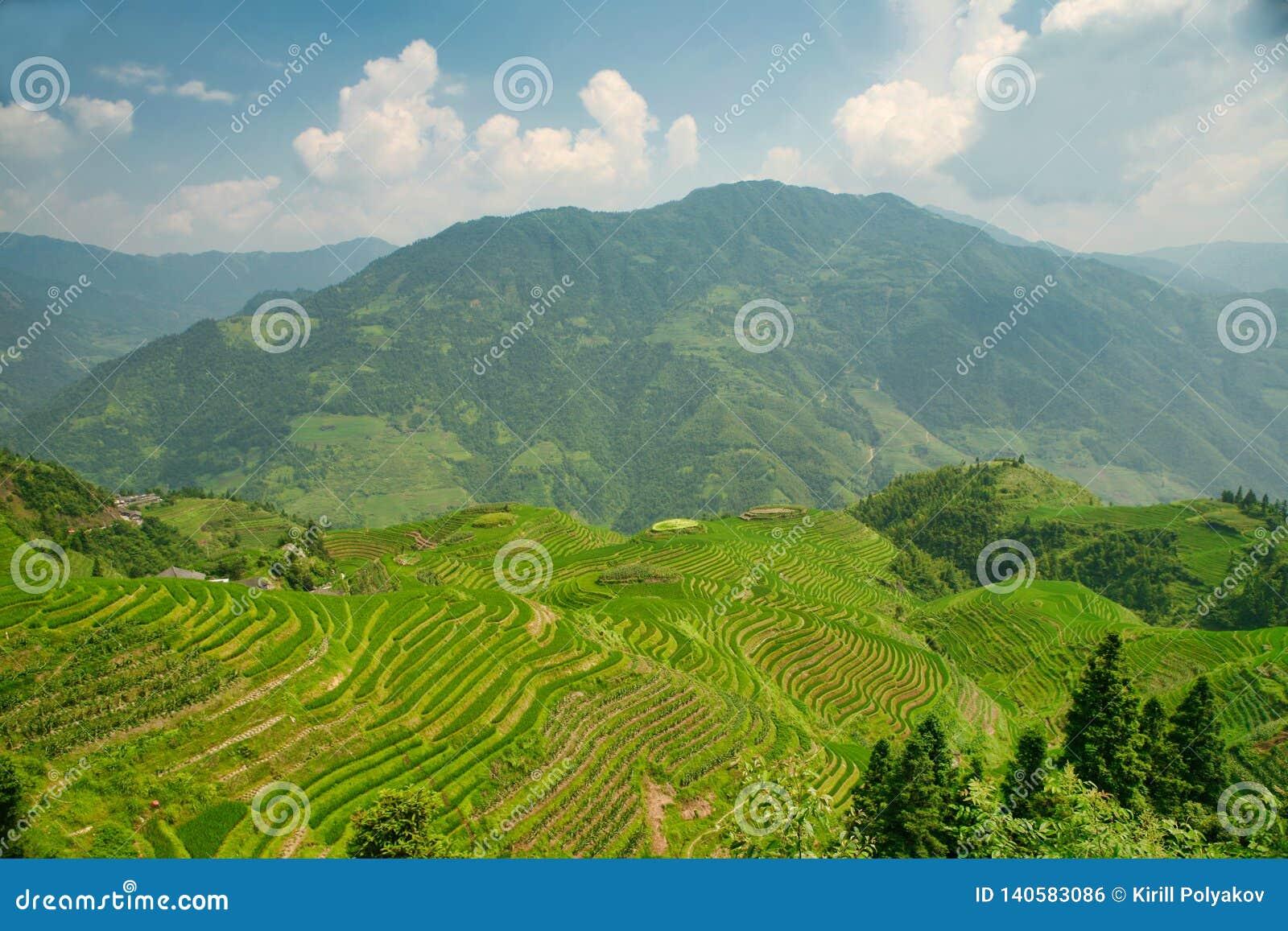 Όμορφη άποψη των σμαραγδένιων πεζουλιών ρυζιού Longjie's και των περιβαλλόντων βουνών