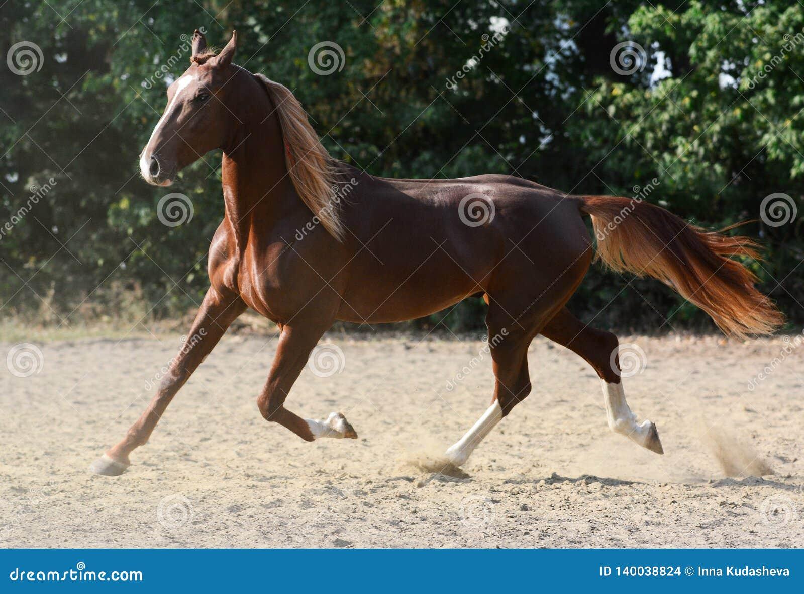 Όμορφο κόκκινο άλογο που οργανώνεται στο καλοκαίρι ελευθερίας