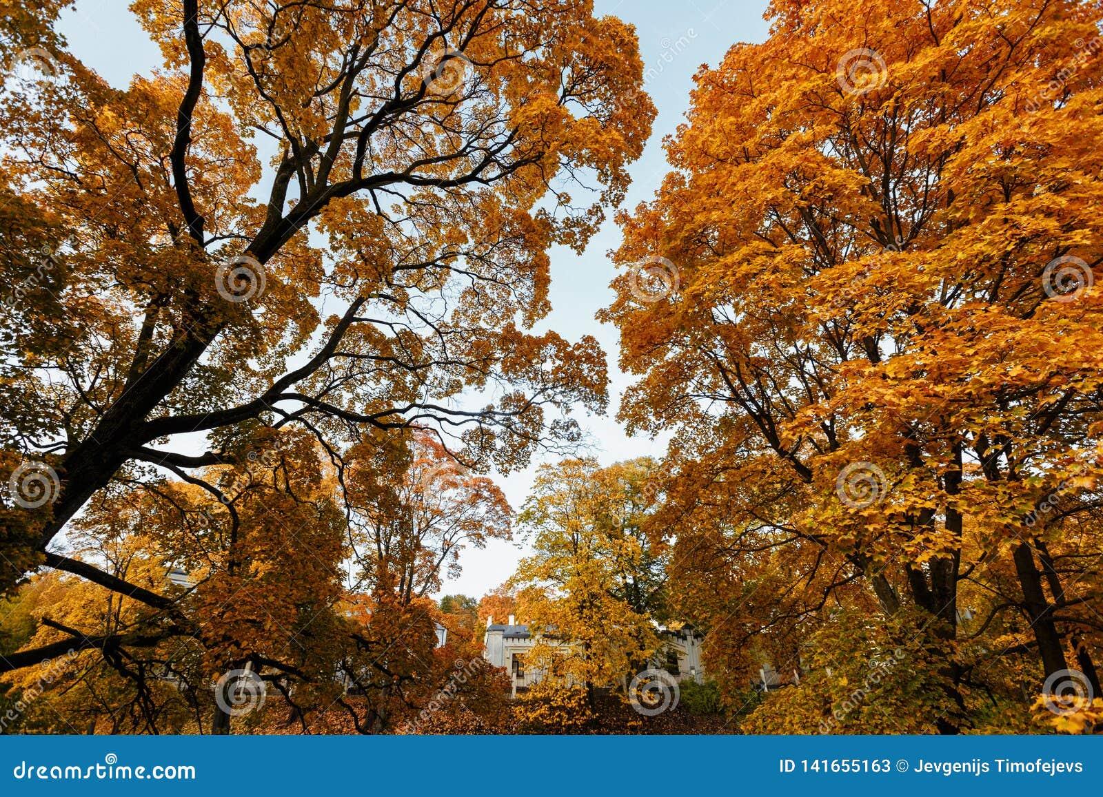 Όμορφο τοπίο φθινοπώρου με τα κίτρινους δέντρα και τον ήλιο Μειωμένο φυσικό υπόβαθρο φύλλων
