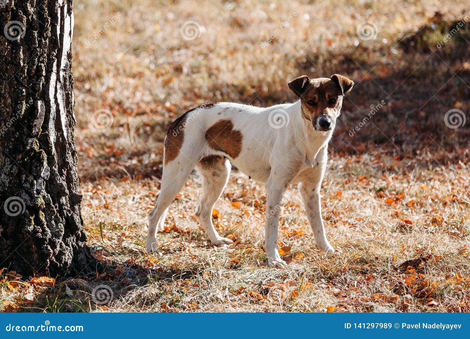 Σκυλί στο πάρκο υπαίθρια