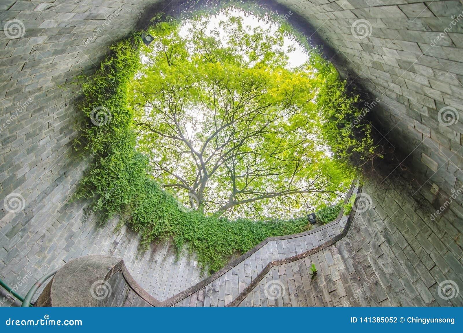 Σπειροειδής σκάλα υπόγεια να διασχίσει και το δέντρο στη σήραγγα στο κονσερβοποιώντας πάρκο οχυρών, Σιγκαπούρη