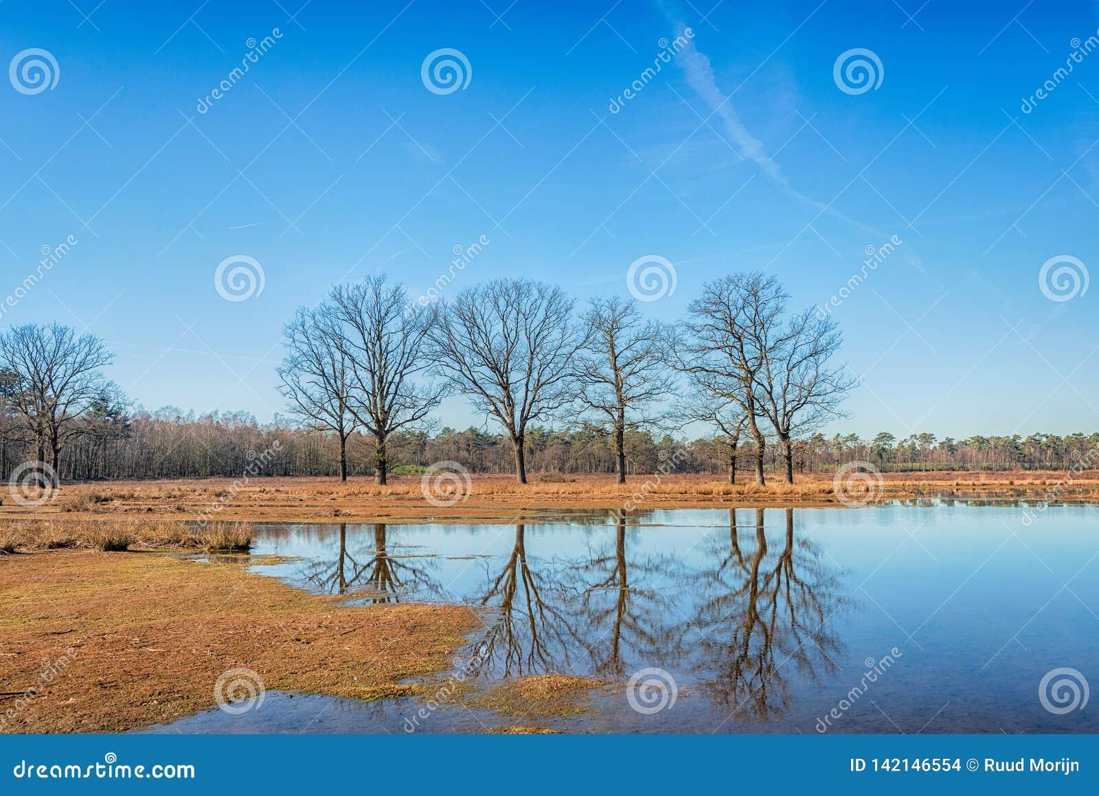 Τα δέντρα με τους γυμνούς κλάδους απεικόνισαν στο ομαλό νερό καθρεφτών ενός μόνου στο wintertime