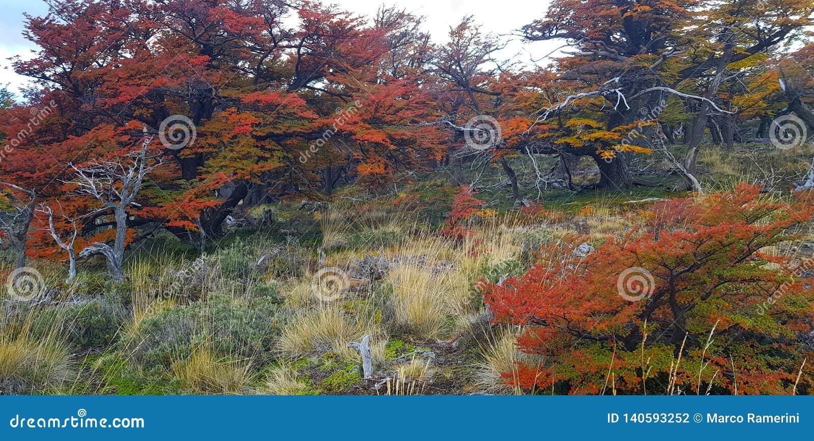 Τα δέντρα με τα χρώματα φθινοπώρου και τοποθετούν τη Fitz Roy, Παταγωνία, Αργεντινή