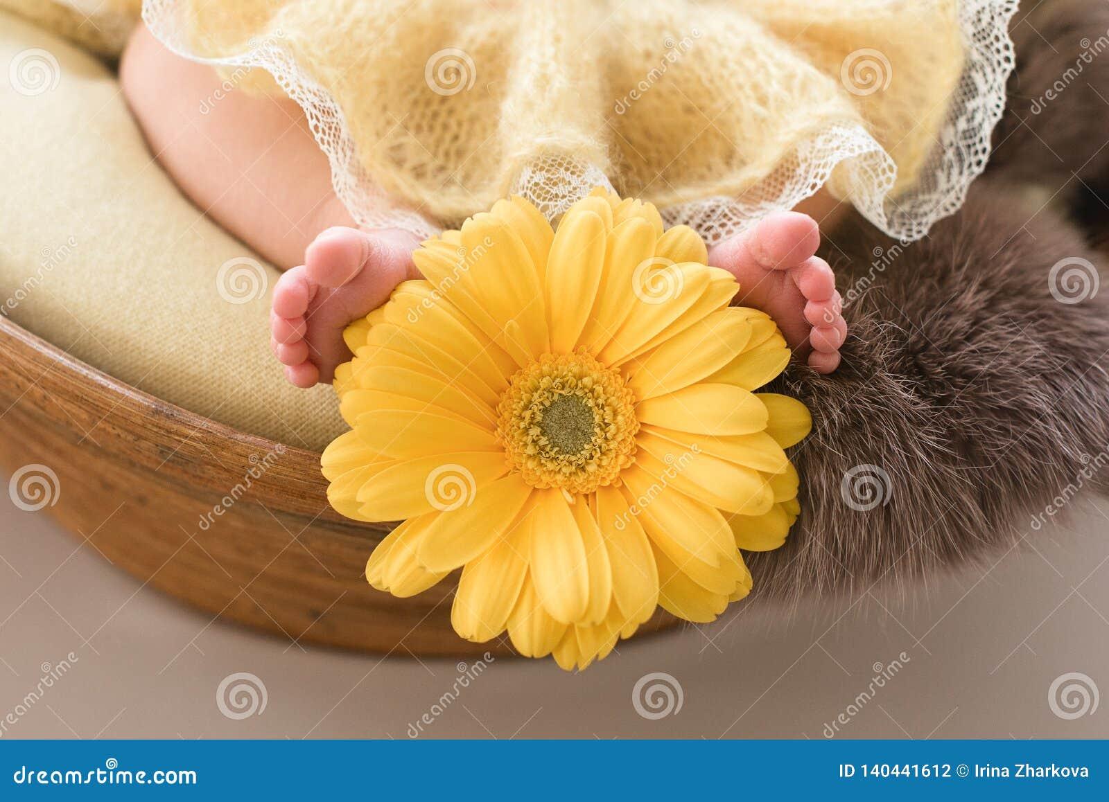 Τα πόδια ενός νεογέννητου κοριτσιού, λίγο ballerina στα χνουδωτά σημεία, χορευτής κούρασαν, φούστα tutu, νεογέννητη