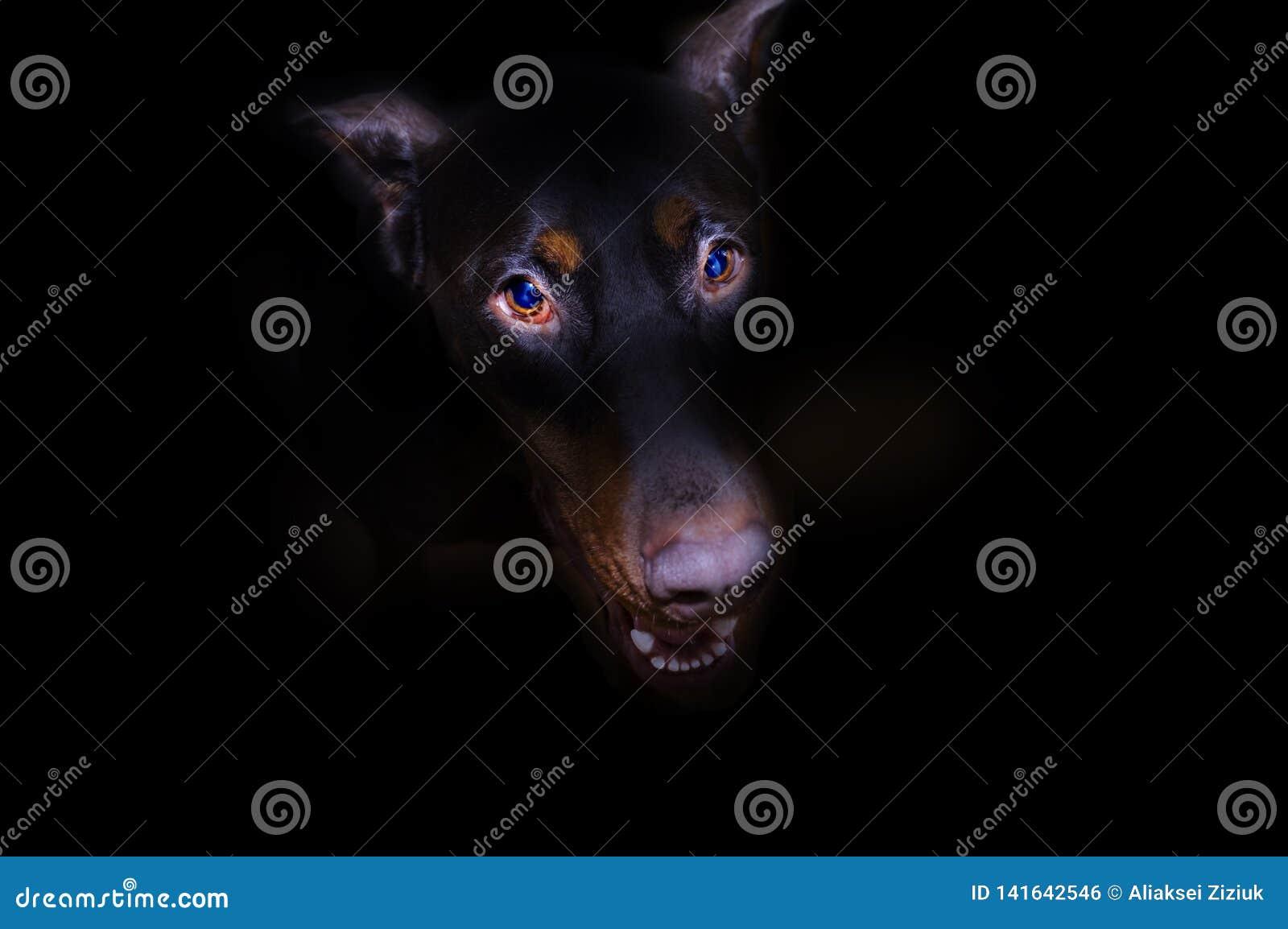 Το κεφάλι του σκυλιού προεξέχει από το σκοτάδι