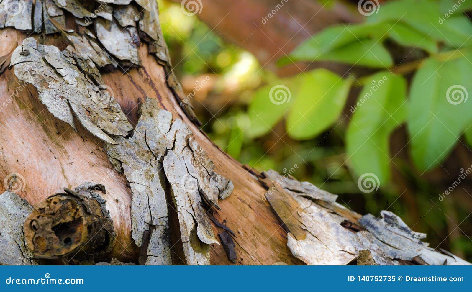 Το ξύλο με την γκρίζα pealing σύσταση δερμάτων