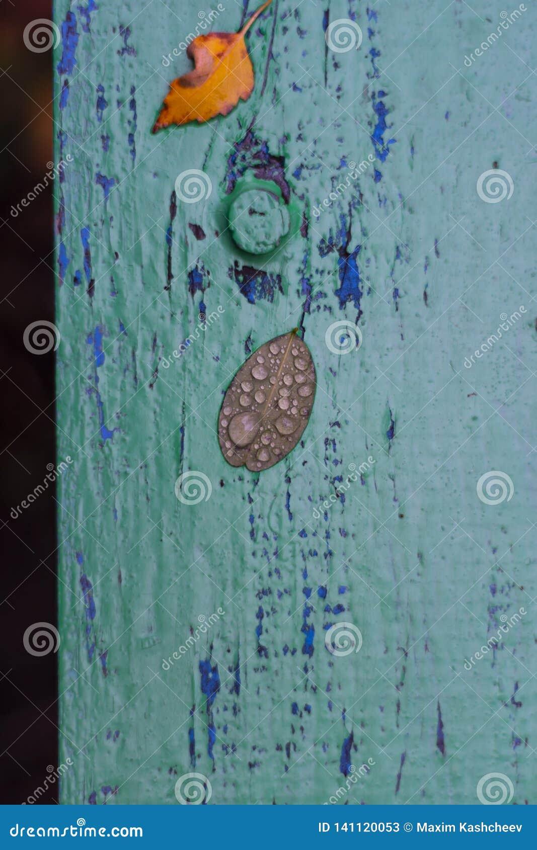Φύλλα φθινοπώρου σε έναν χρωματισμένο πίνακα Υγρά φύλλα μετά από τη βροχή Φύλλα τον Οκτώβριο και το Νοέμβριο Ανασκόπηση για τις φ