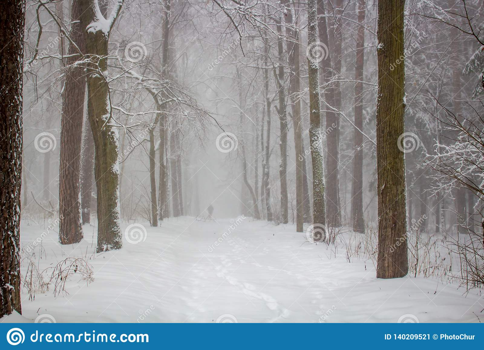 Χιονοθύελλα χιονιού στο πάρκο το χειμώνα, φτωχή διαφάνεια