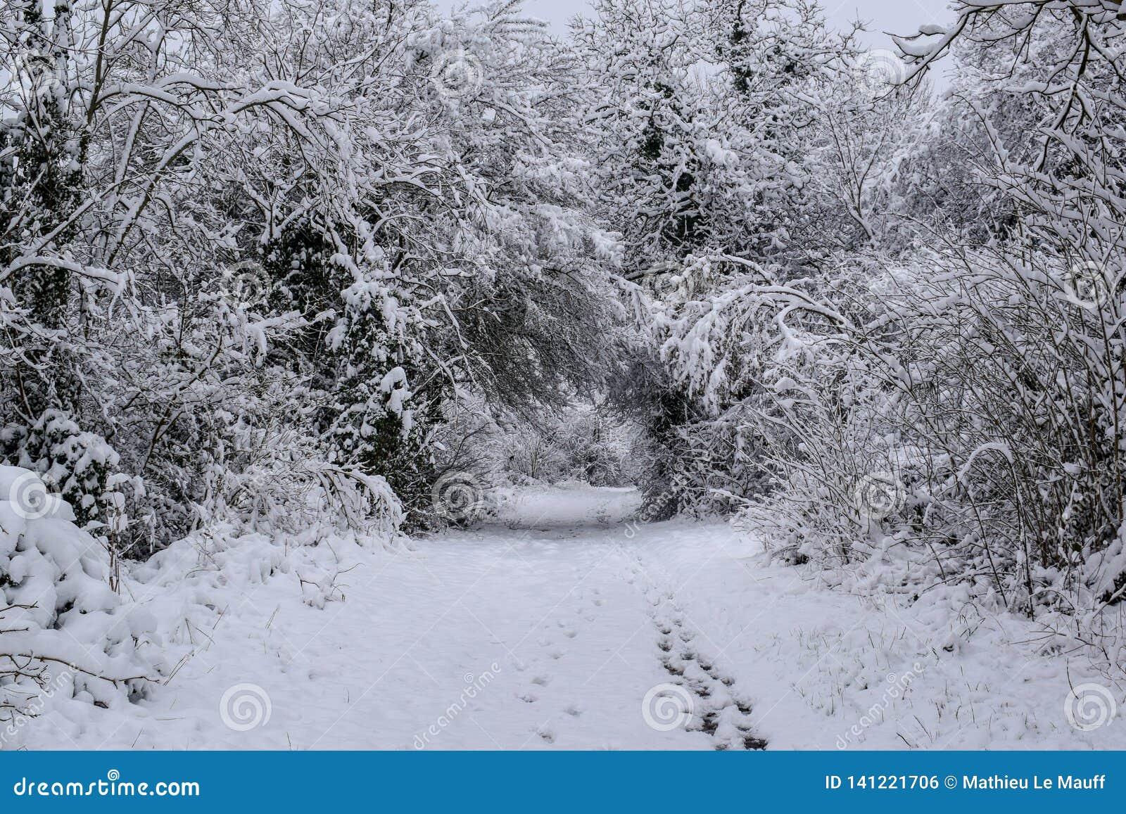 Χιονώδες δασικό ίχνος στη γαλλική επαρχία κατά τη διάρκεια της εποχής/του χειμώνα Χριστουγέννων