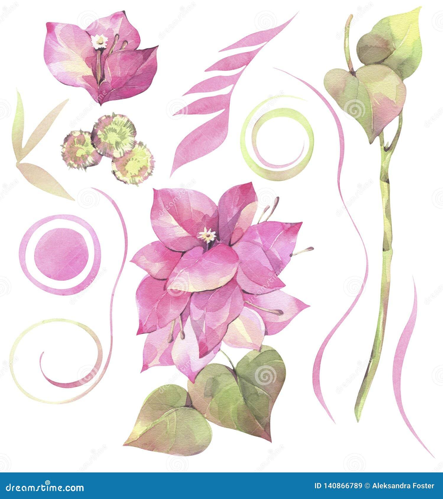 Χρωματισμένη χέρι απεικόνιση watercolor Floral σύνολο με τα λουλούδια του bougainvillea και των αφηρημένων στοιχείων